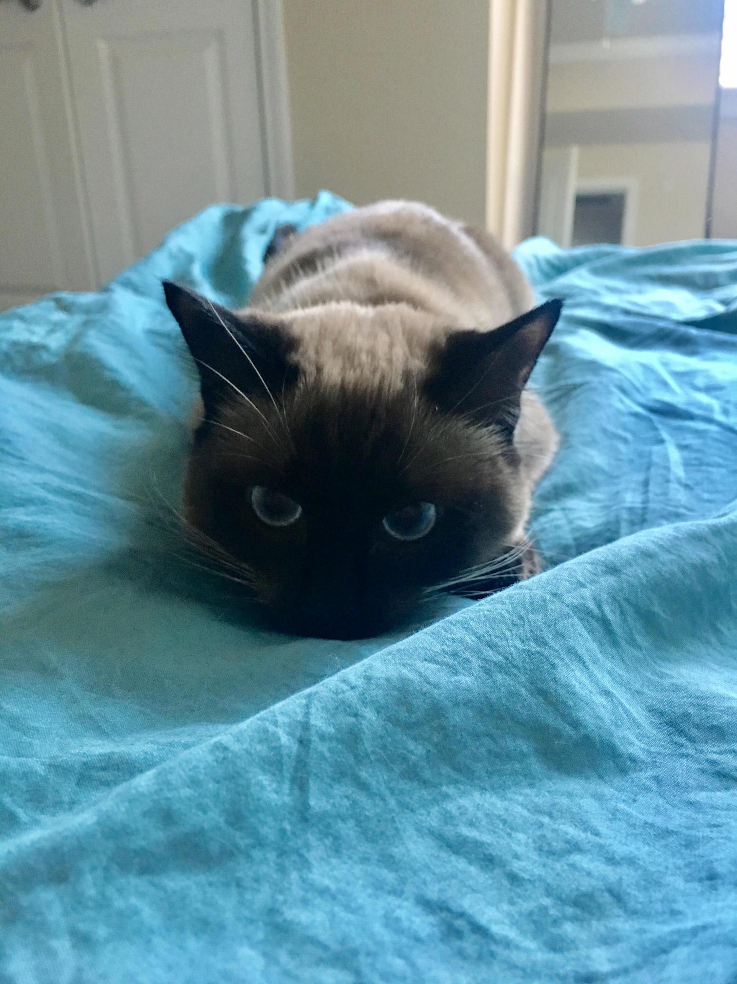 Bettr watch out u… i am cat