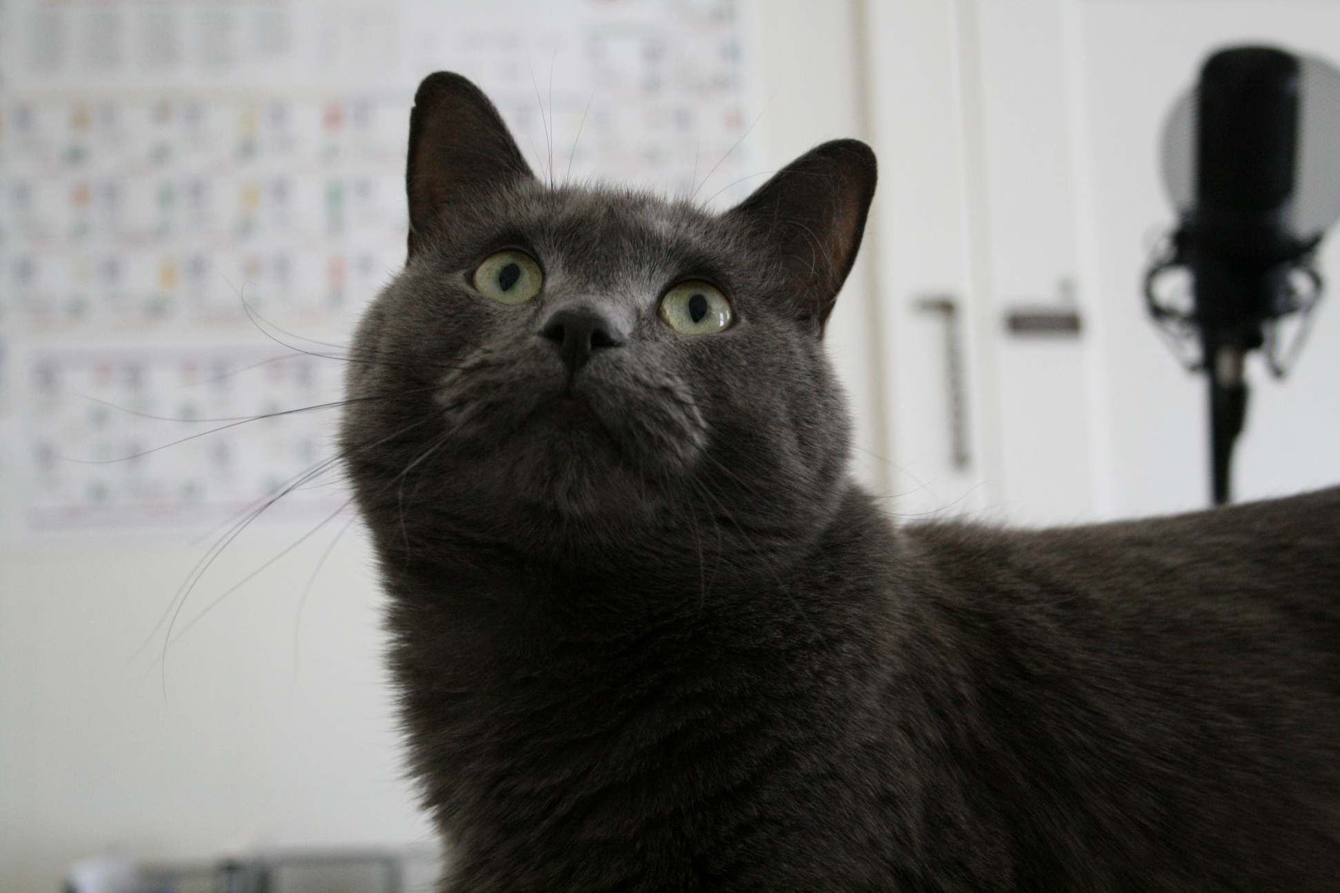 Bought a camera. now have hundreds of pictures of tutti frutti.