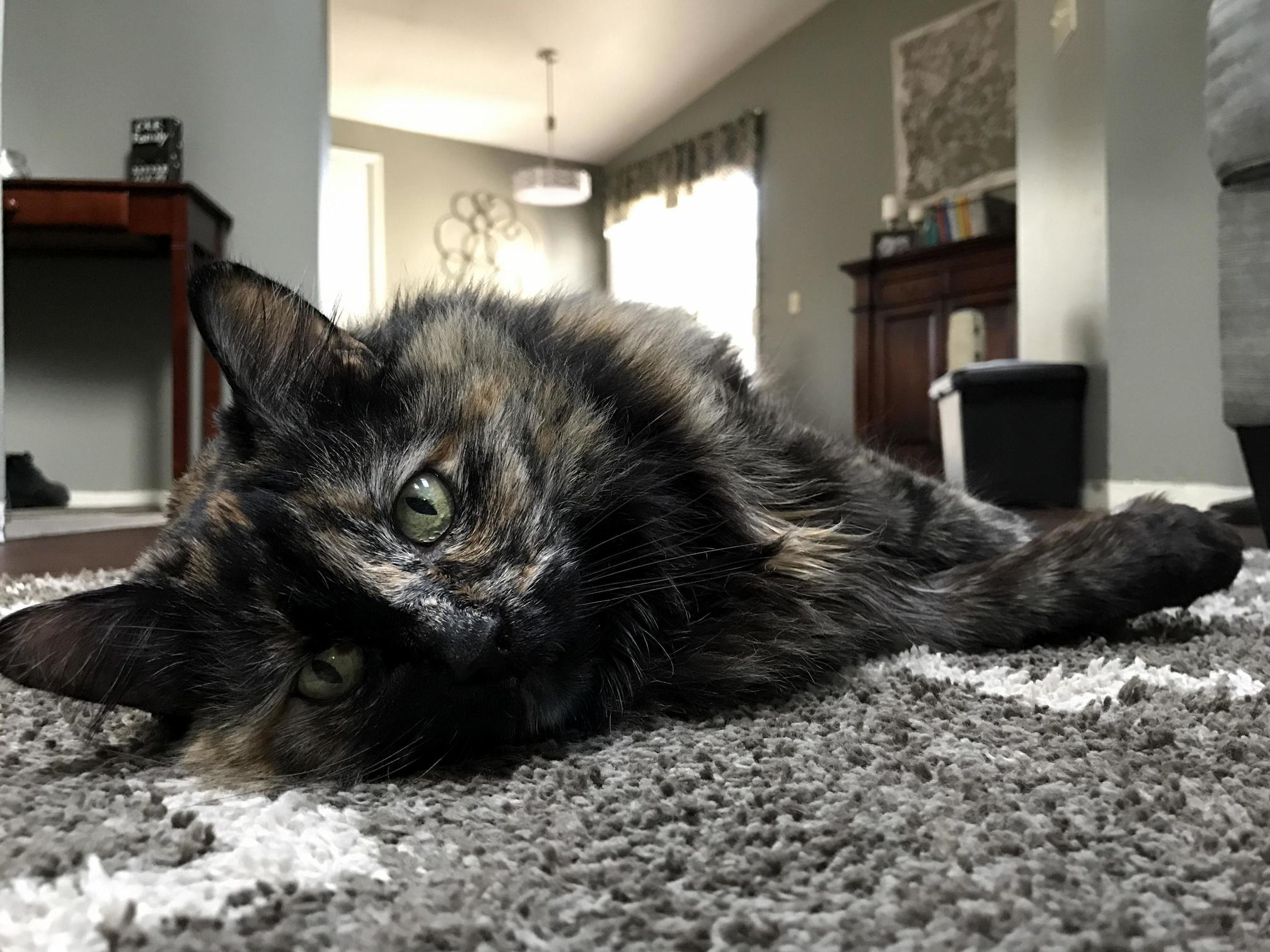 Calie our 15 yr old fuzz hasnt been feeling too well lately any and all good vibes appreciated x post rtorties