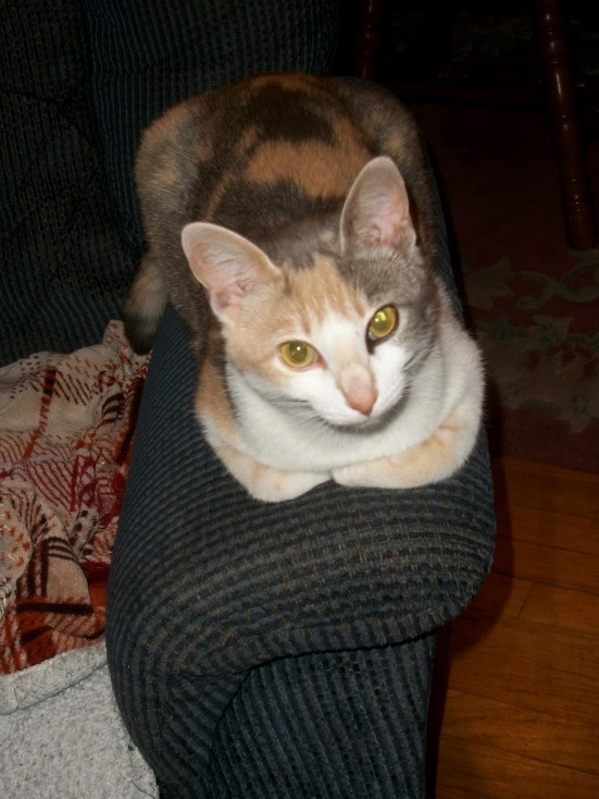 Callie is a dilute calico stray who likes to be indooroutdoor and looks like she has partial eyeliner