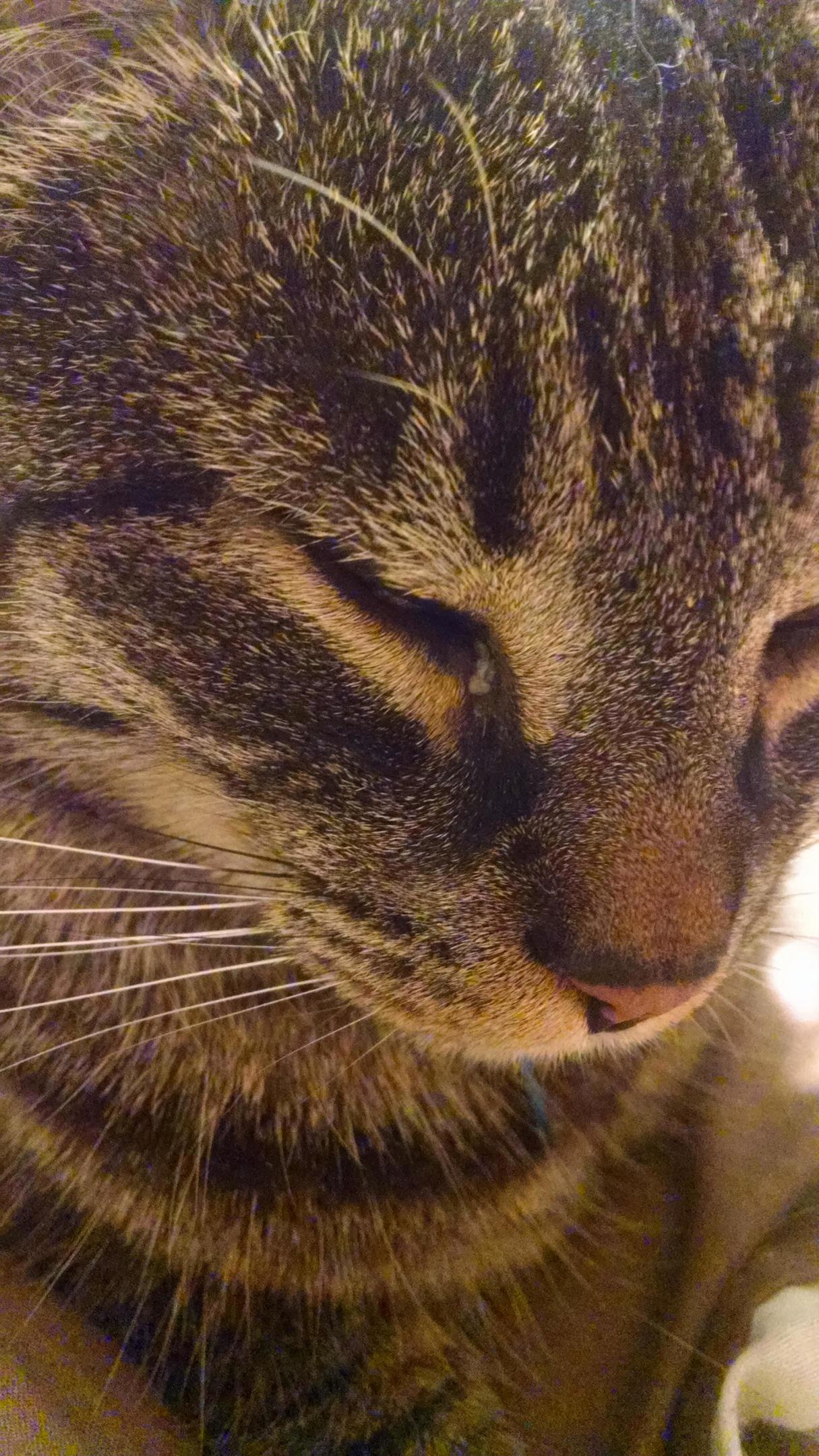 Does anybodys cat have seasonal allergies