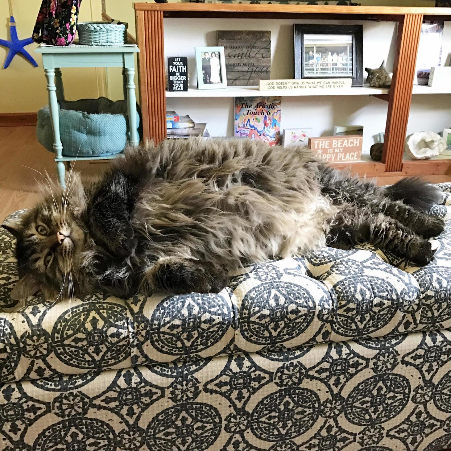 Fat mermaid cat