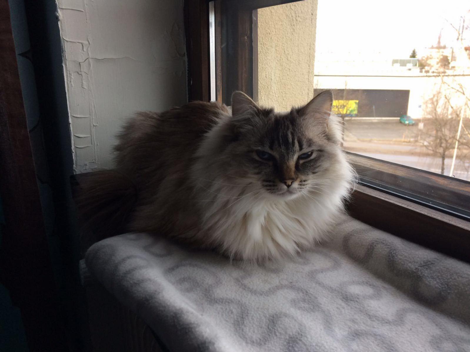 Floofy loaf