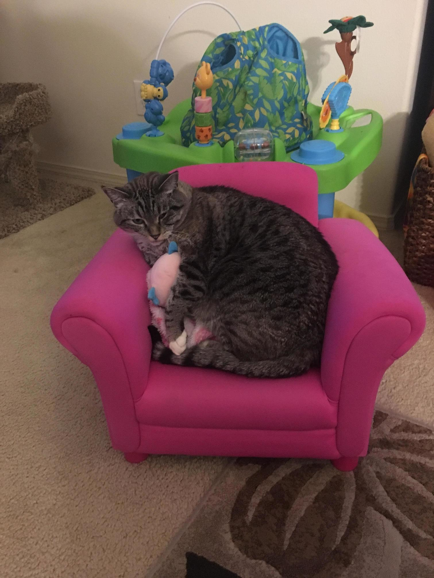 Follow up to my cat and my daughters chair…he still loves it.