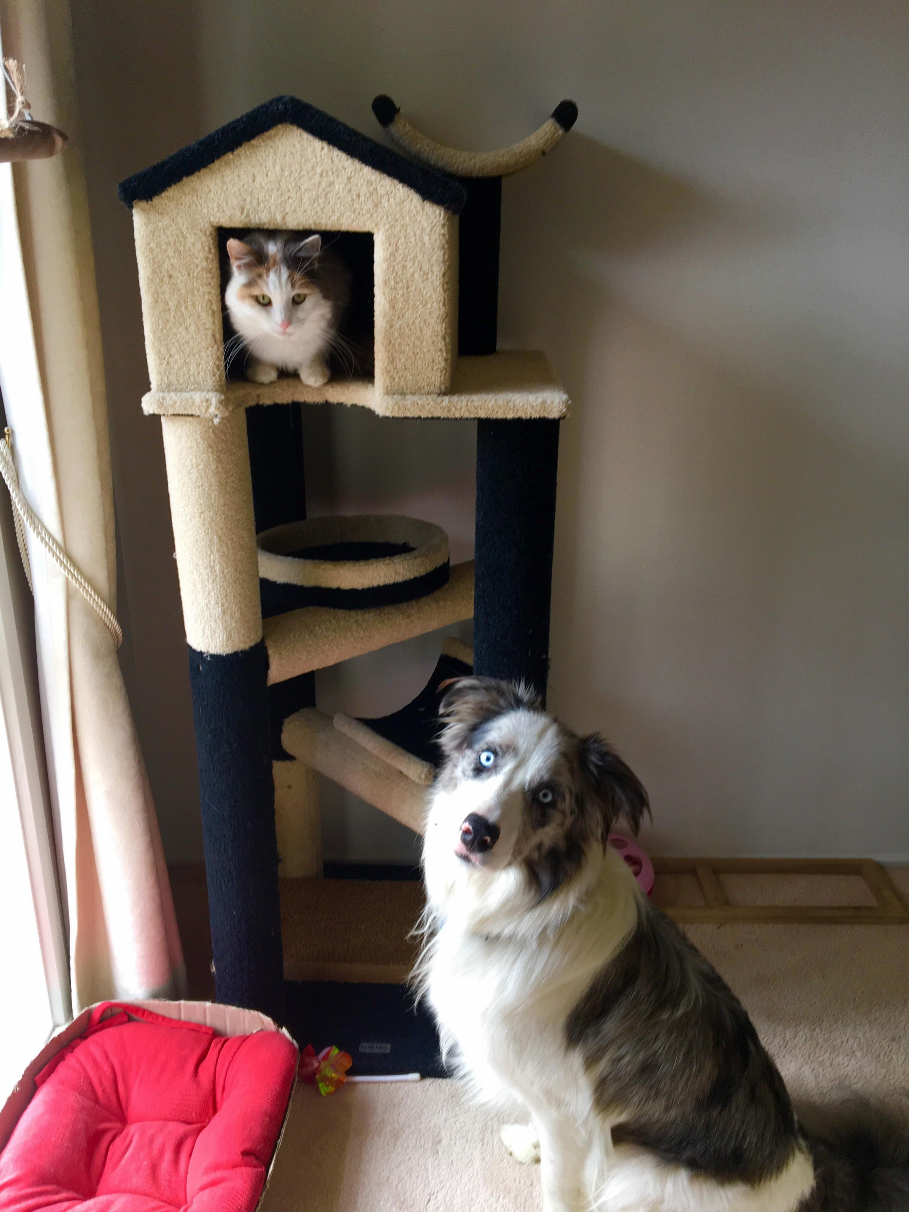 Hates other cats tolerates dogs