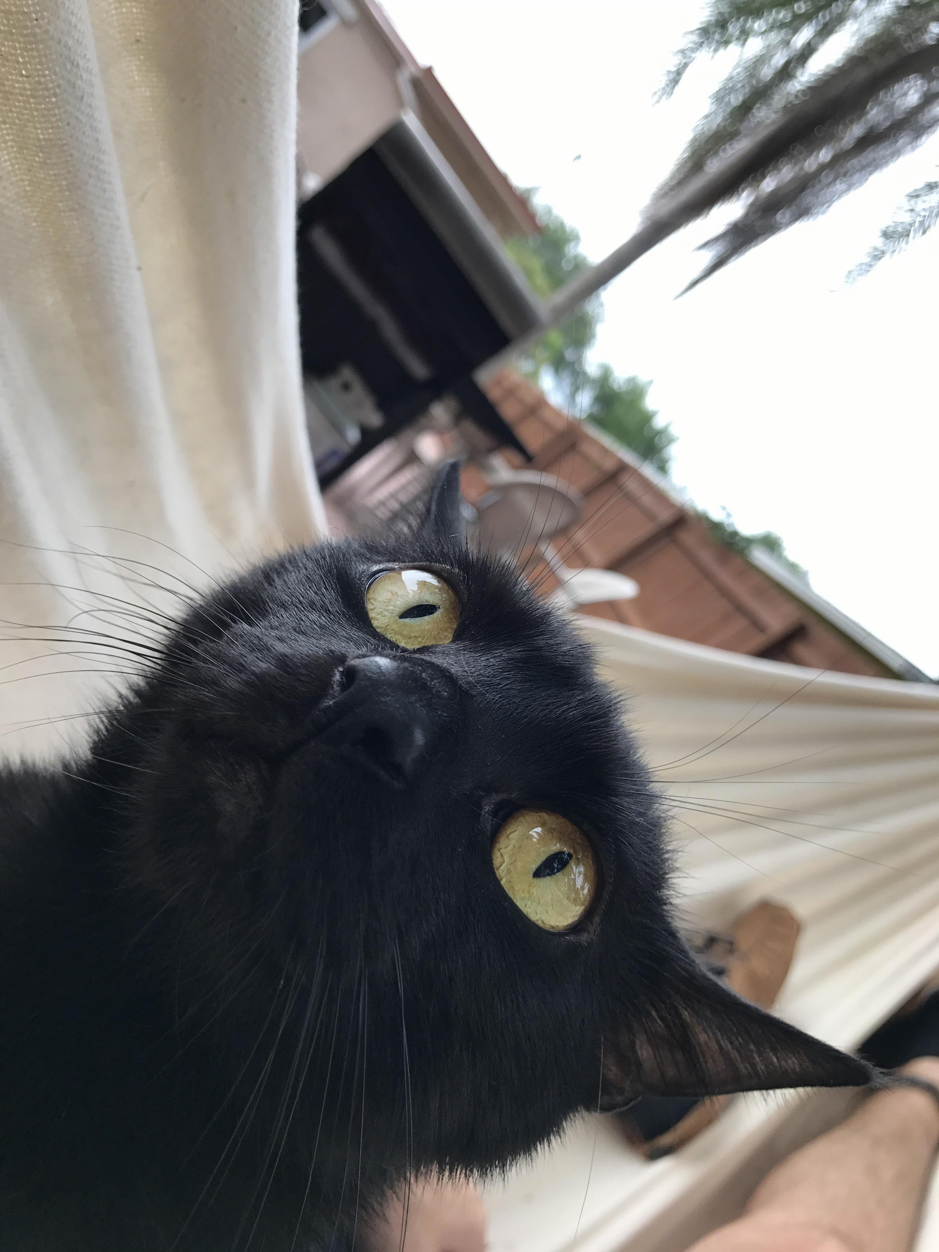 He loves hammocks