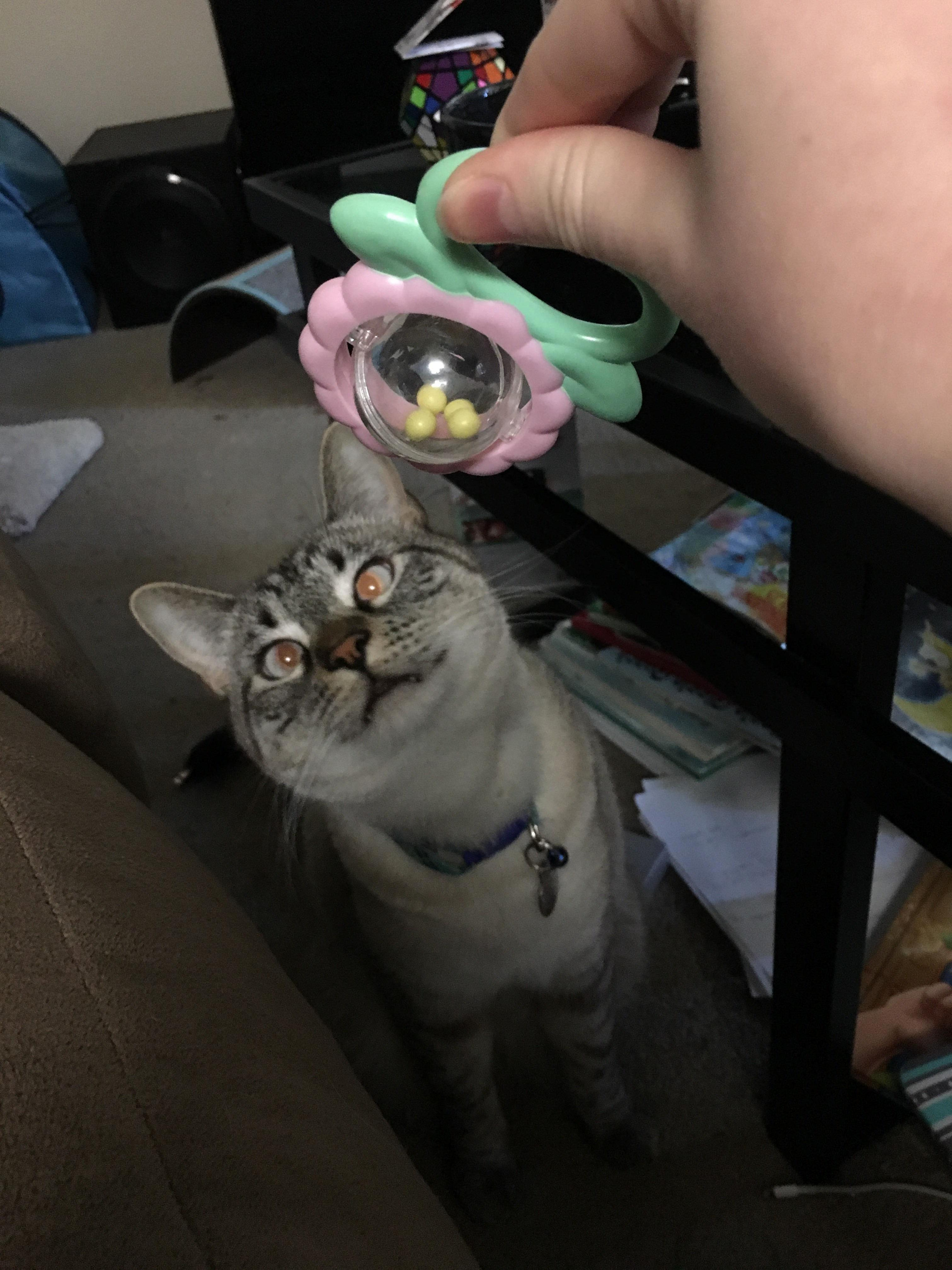 He was fascinated by the rattle
