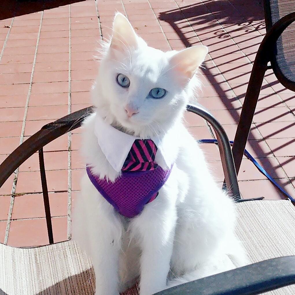 Hi im boo the deaf kitty