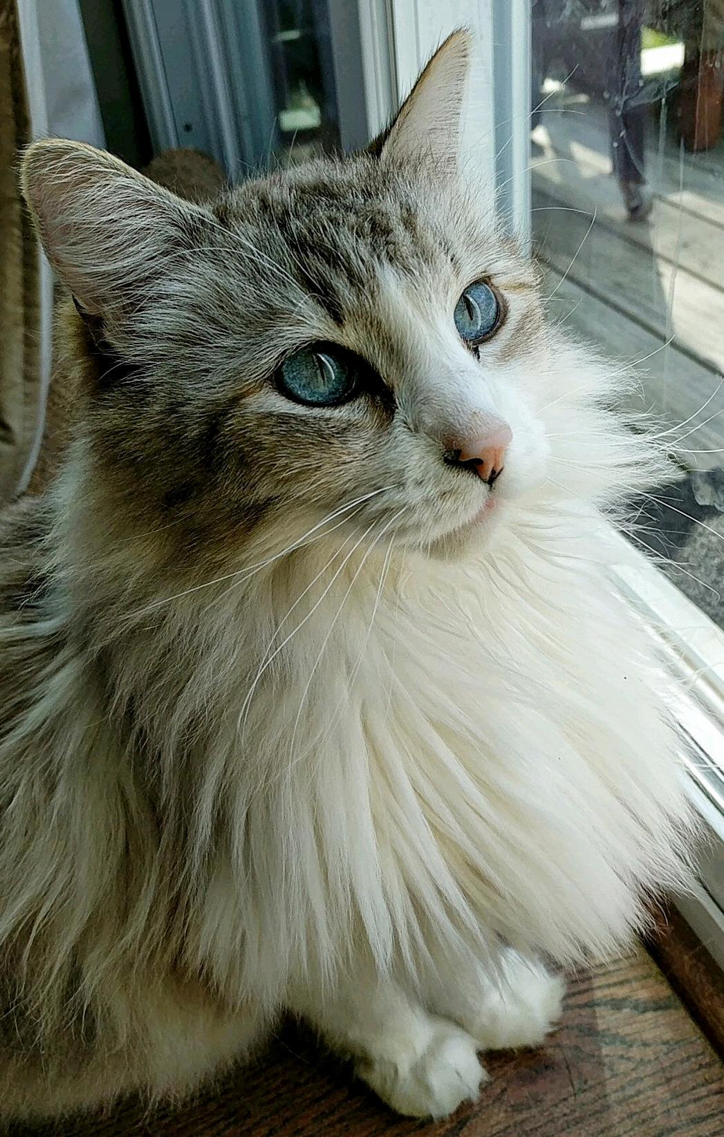 His name is fluffy.