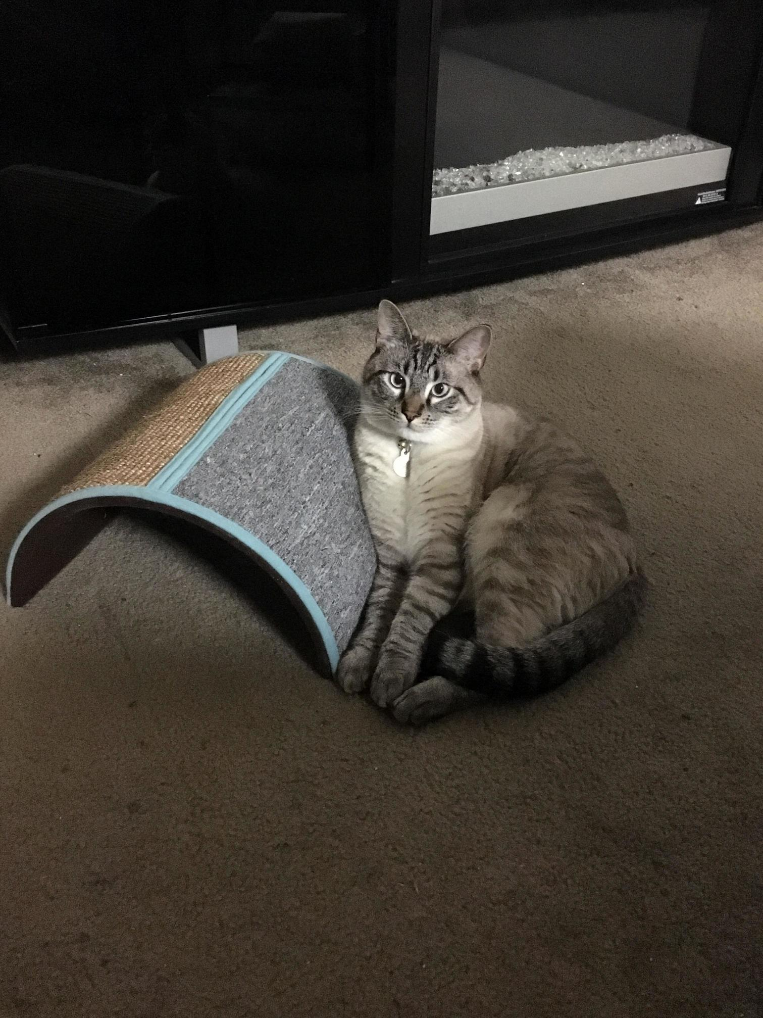 Dark Cat With White Tail Deck