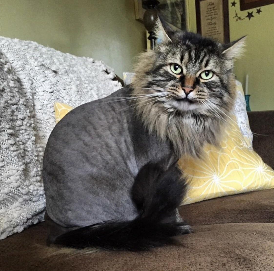 I look fresh with my new lion cut – can we say meow