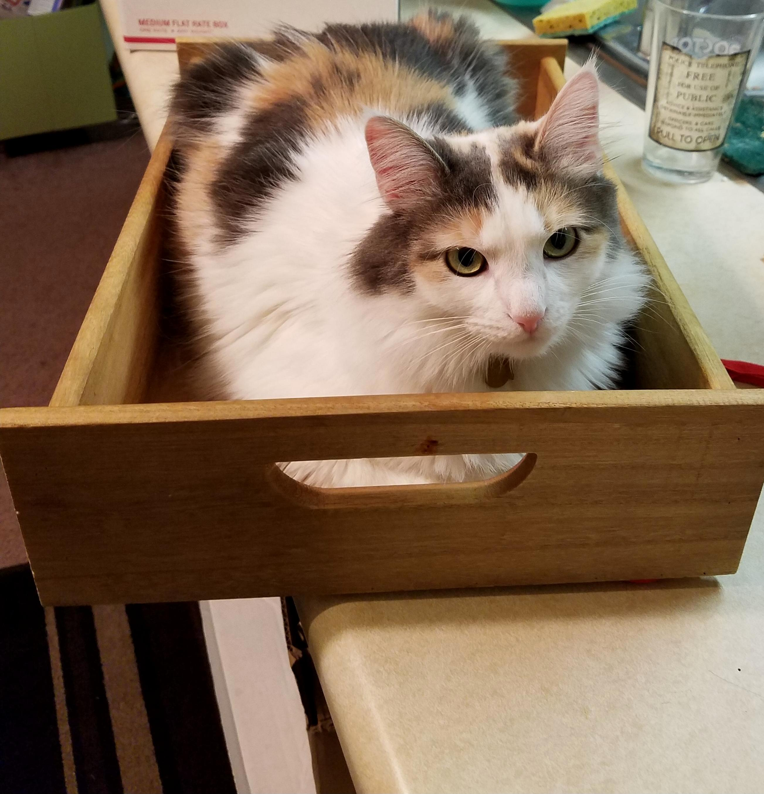 It doesnt count as being on the counter if im in this box