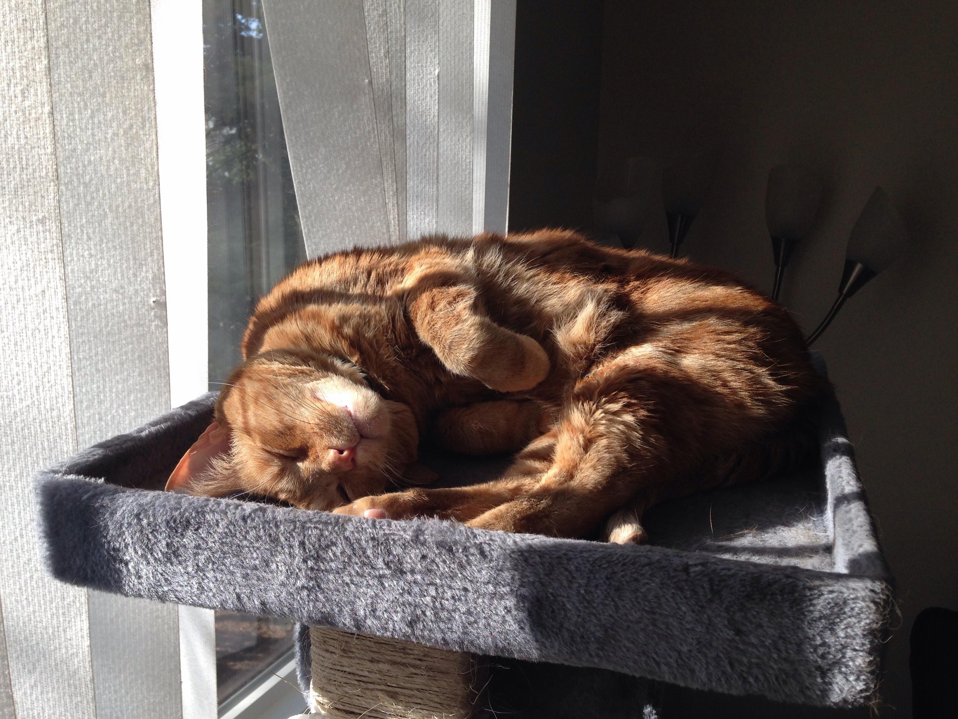 Jimmy likes sunbathing