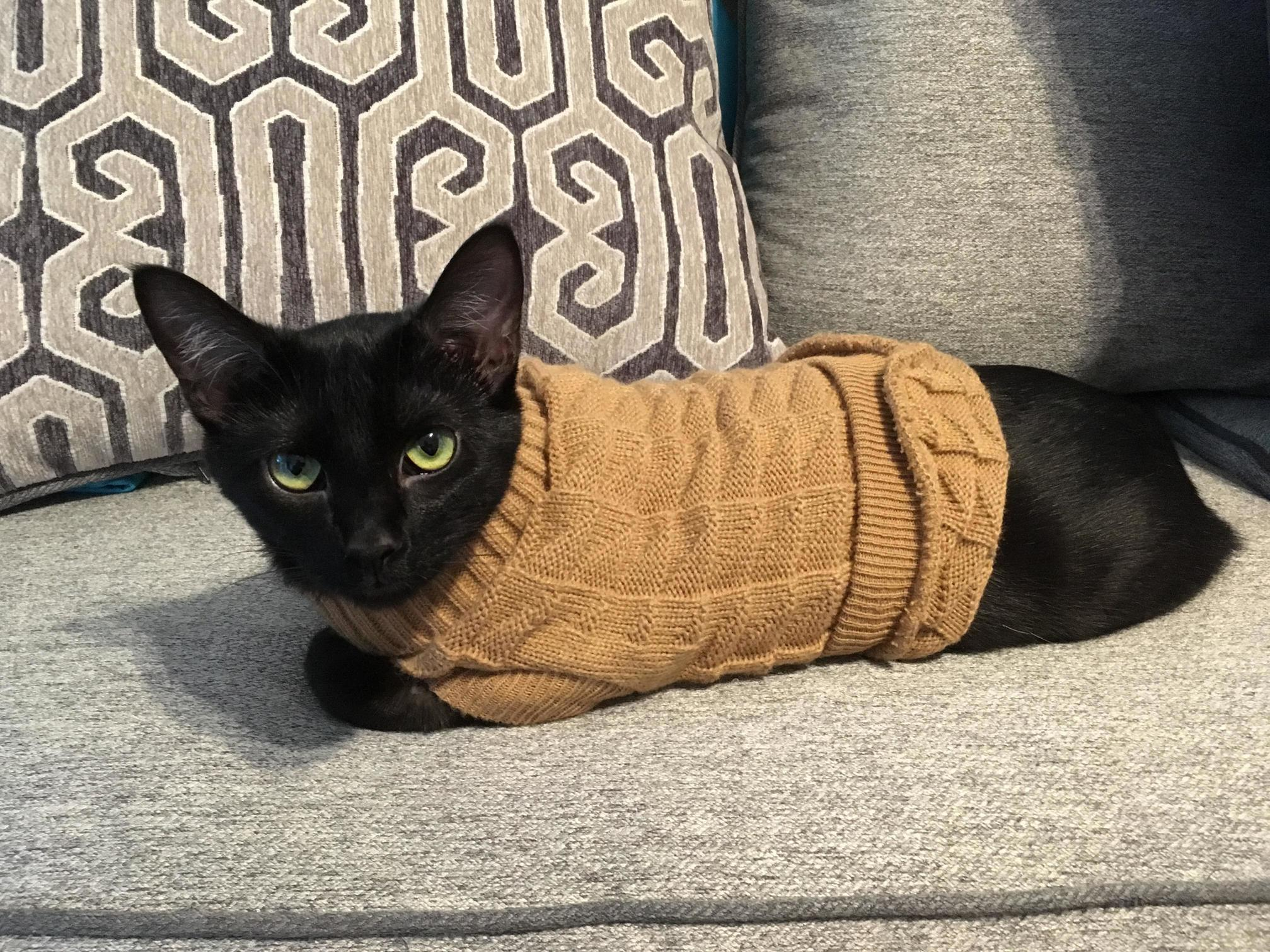 Lady arwen modeling her new sweater