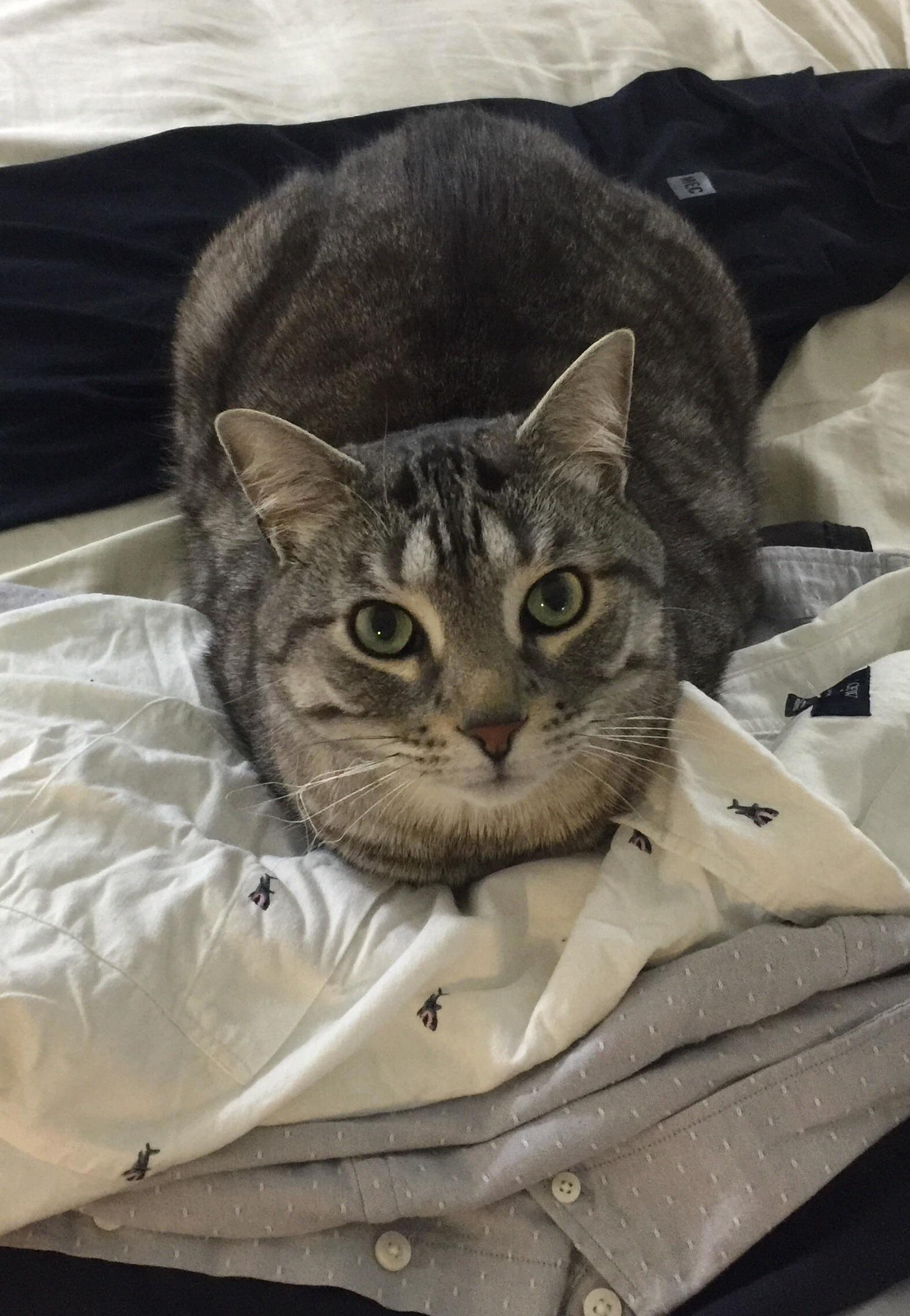 Loaf on clothes.