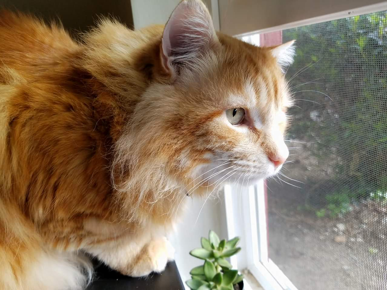 Martin stares down birds outside but would be terrified if they came inside