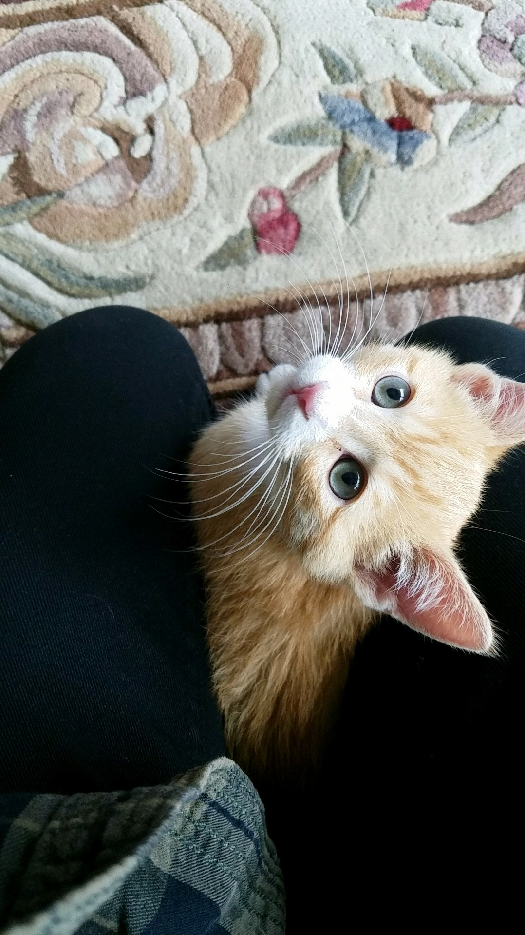 My friends new kitten thomas