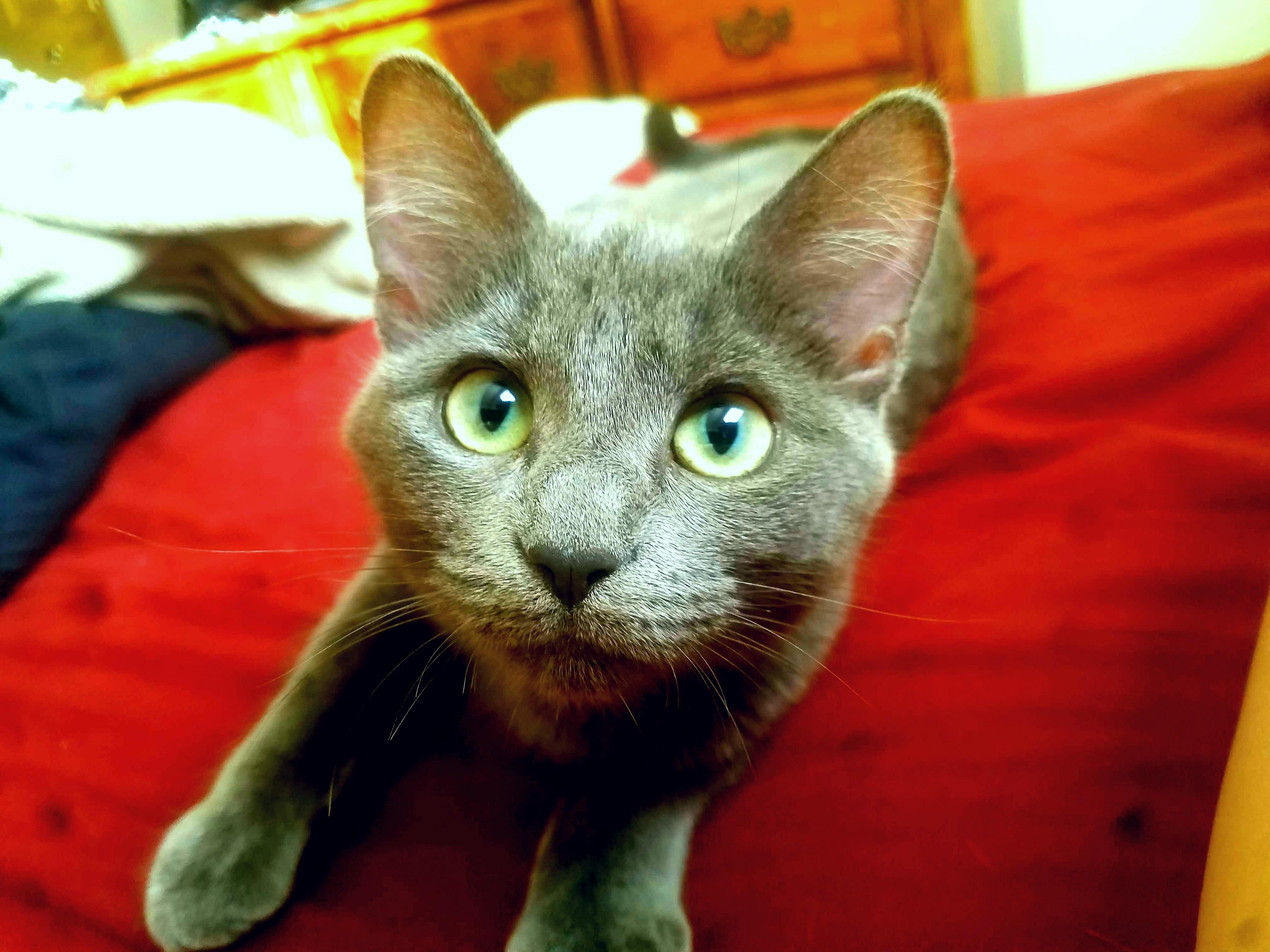 My kitten jynx