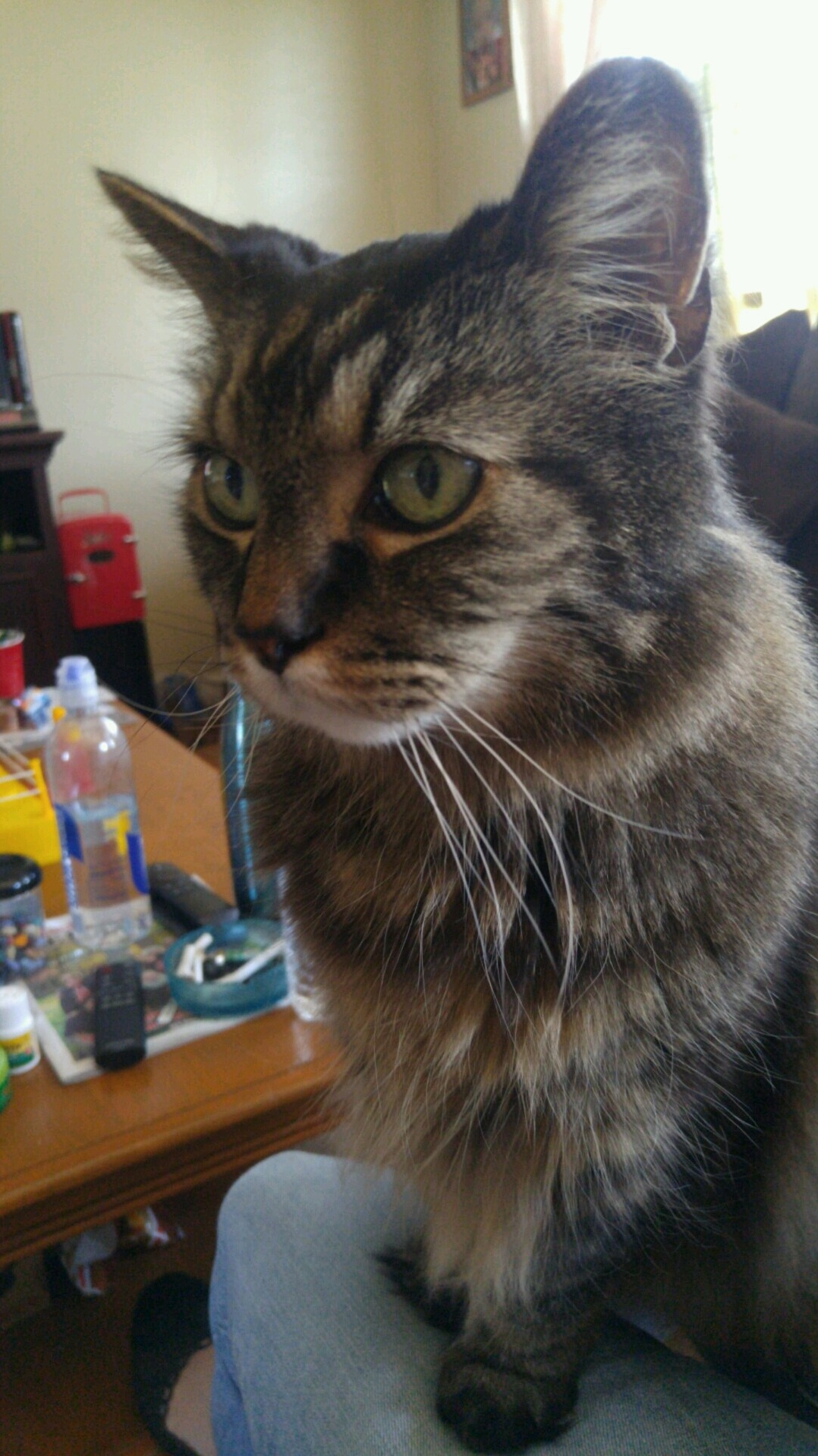 My mother in laws cat freek…. looking good for 17.