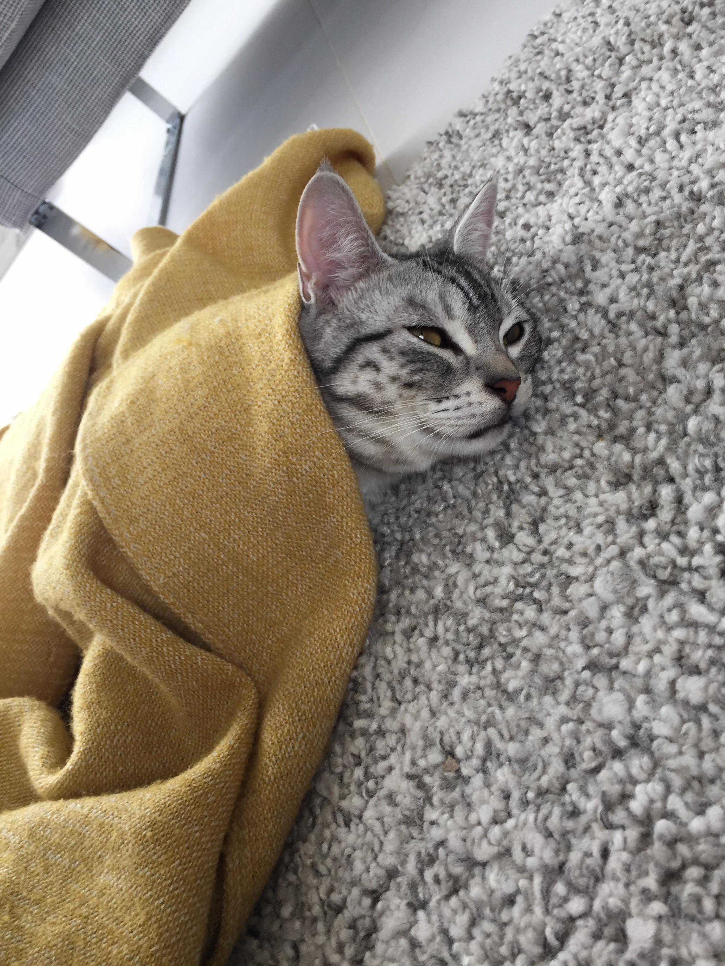 My poor baby is sick so hes cuddling up with his favourite blanket