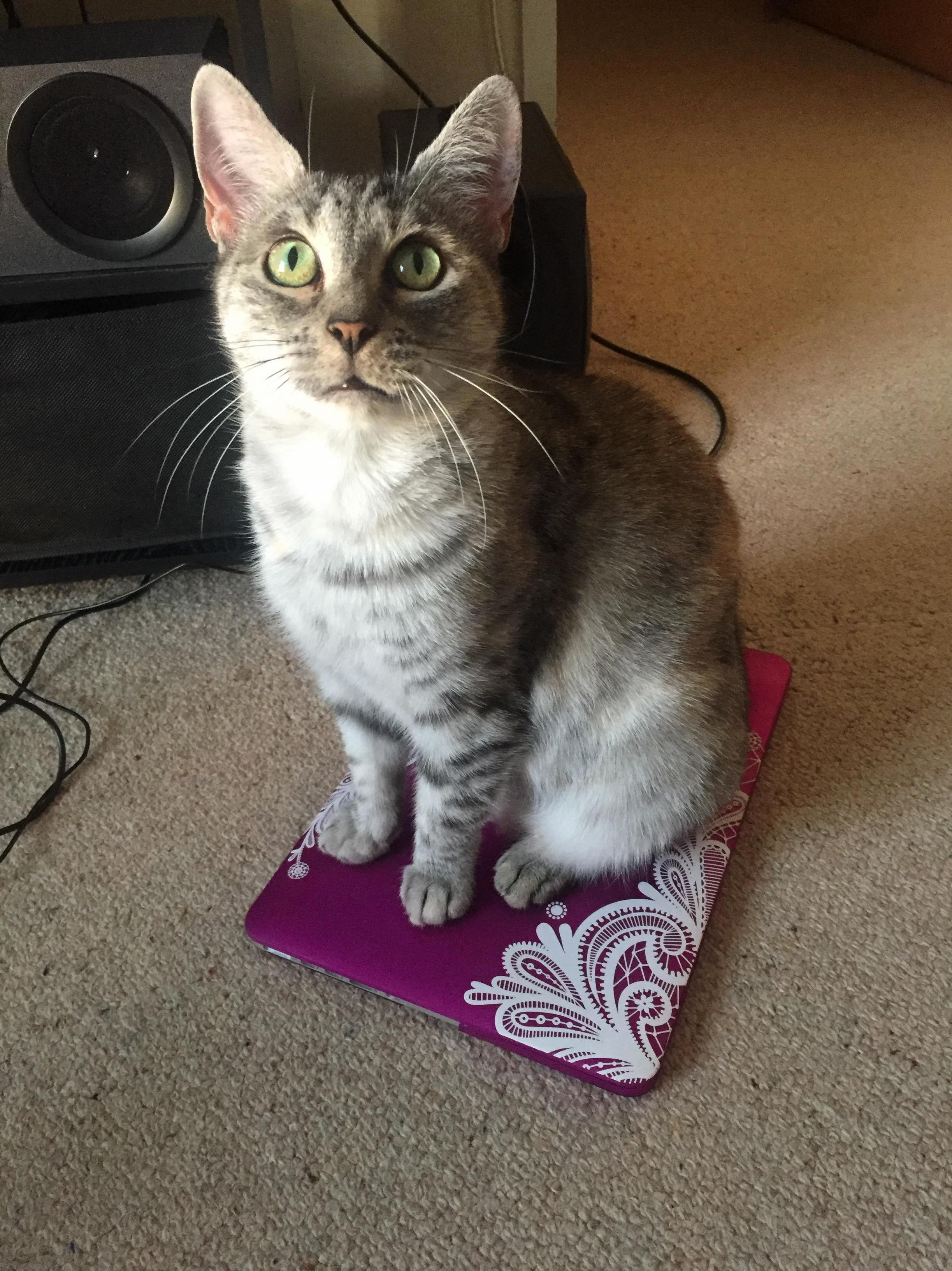 No laptop for you until you give me some pats