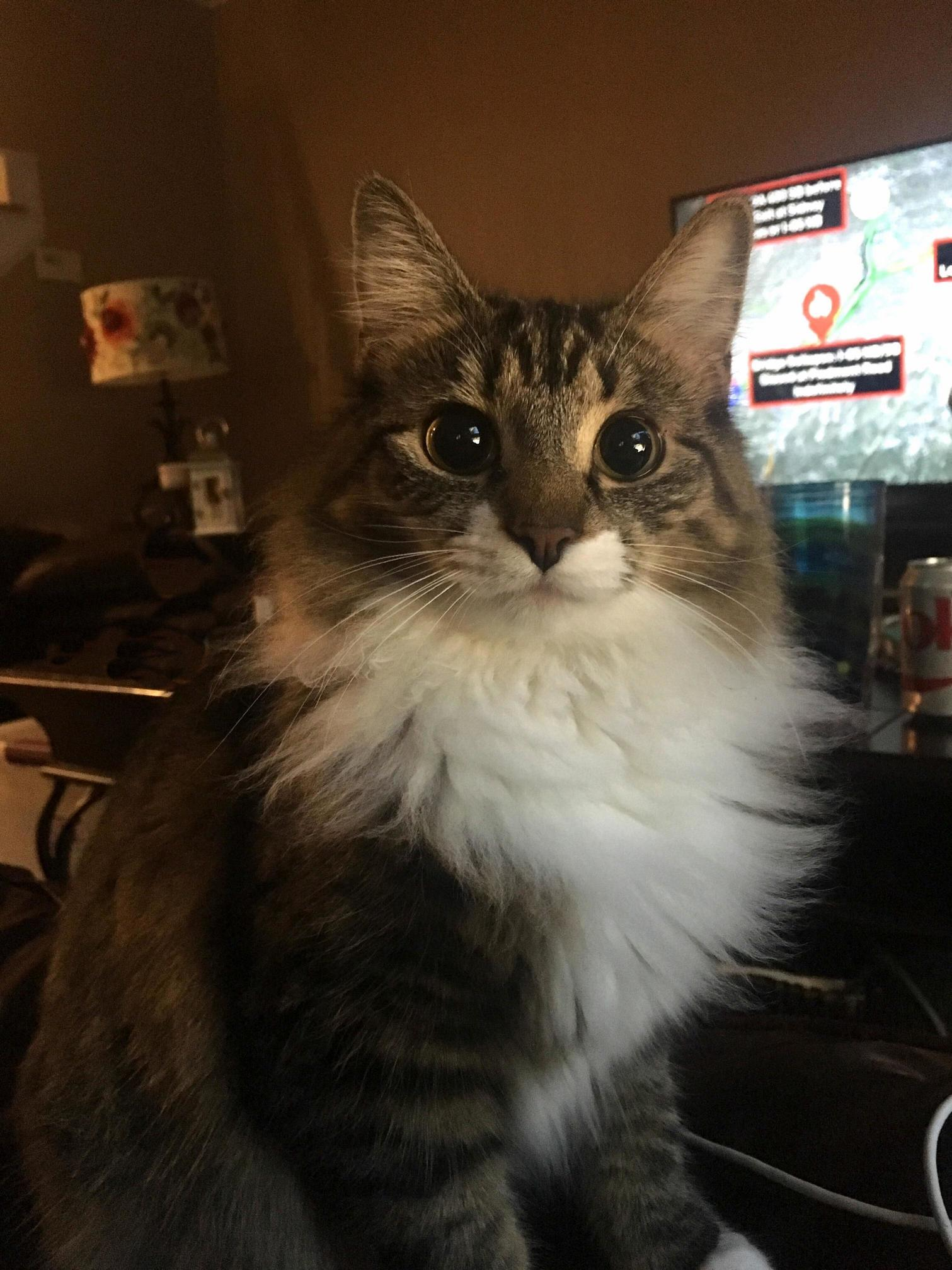 Piper and her mesmerizing floof