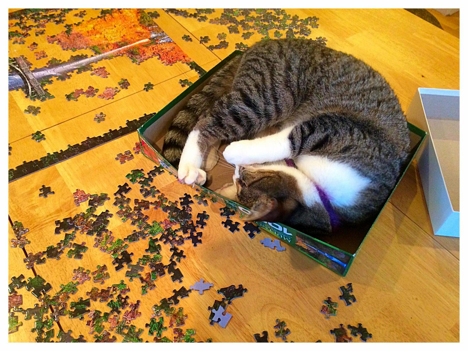 Puzzle helper kitty is not very helpful.