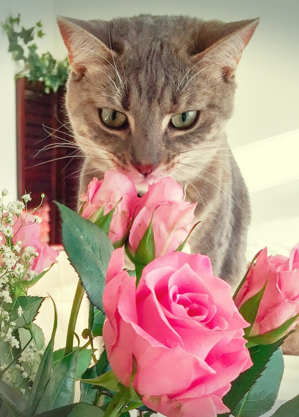 She loves roses