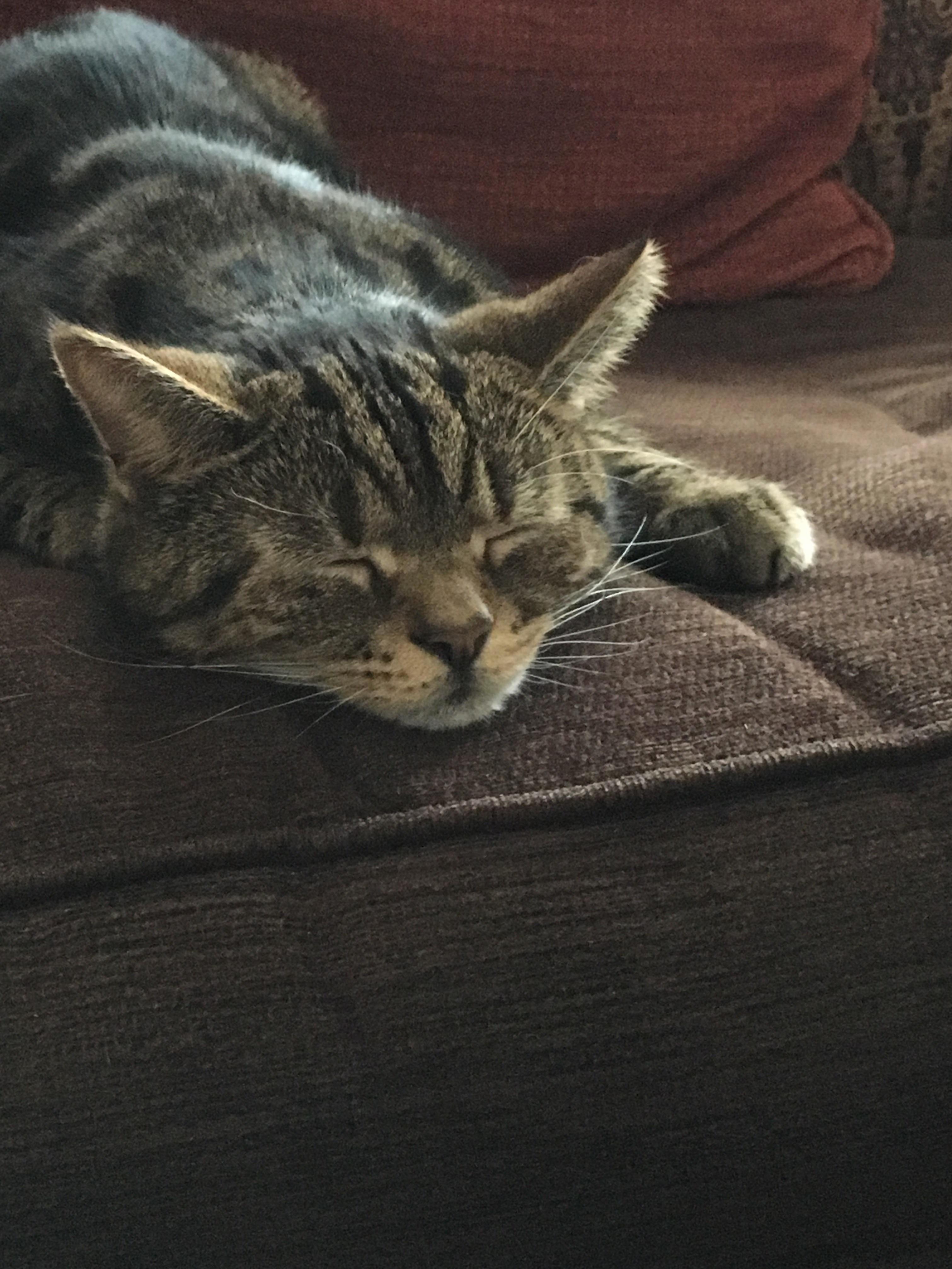Sleepy tigger
