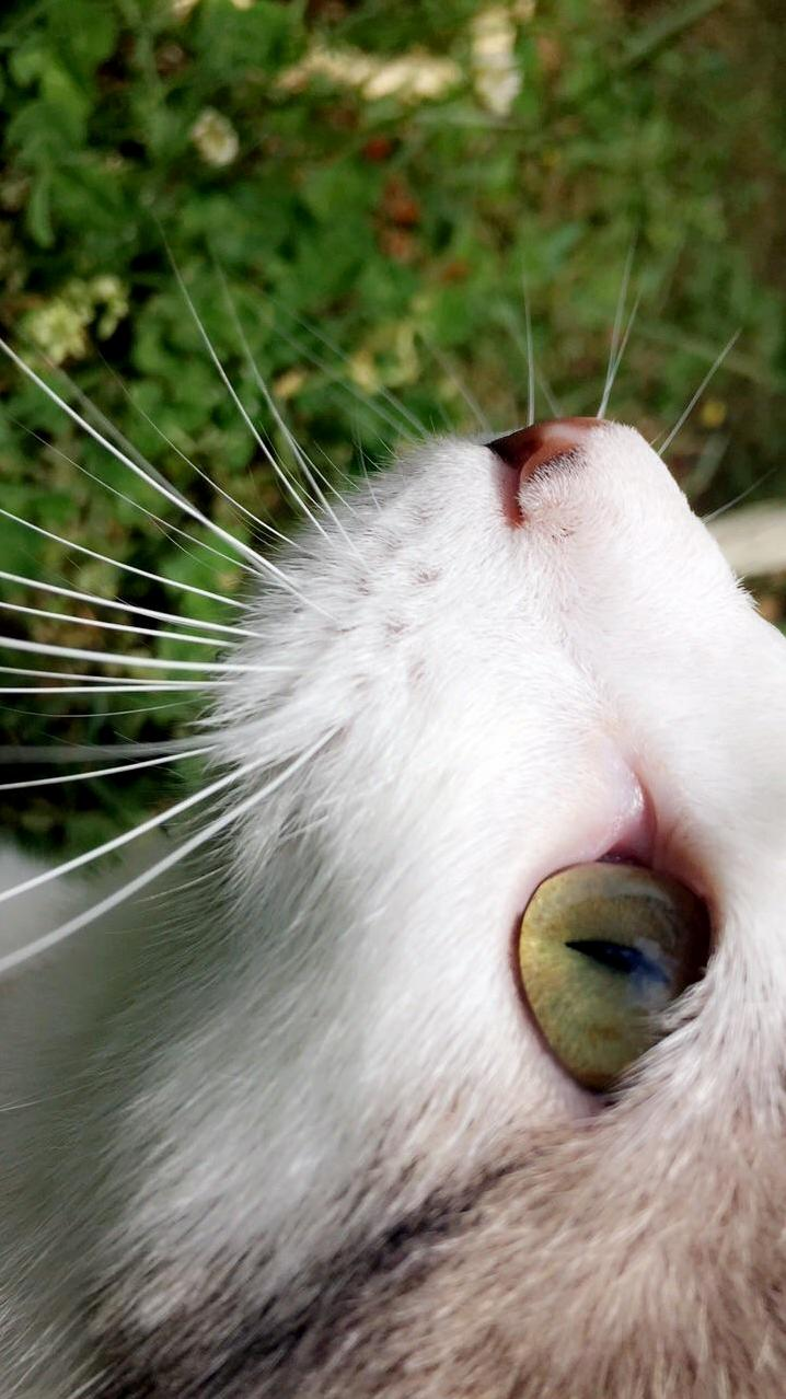 Theres just something about cats eyes that amaze me