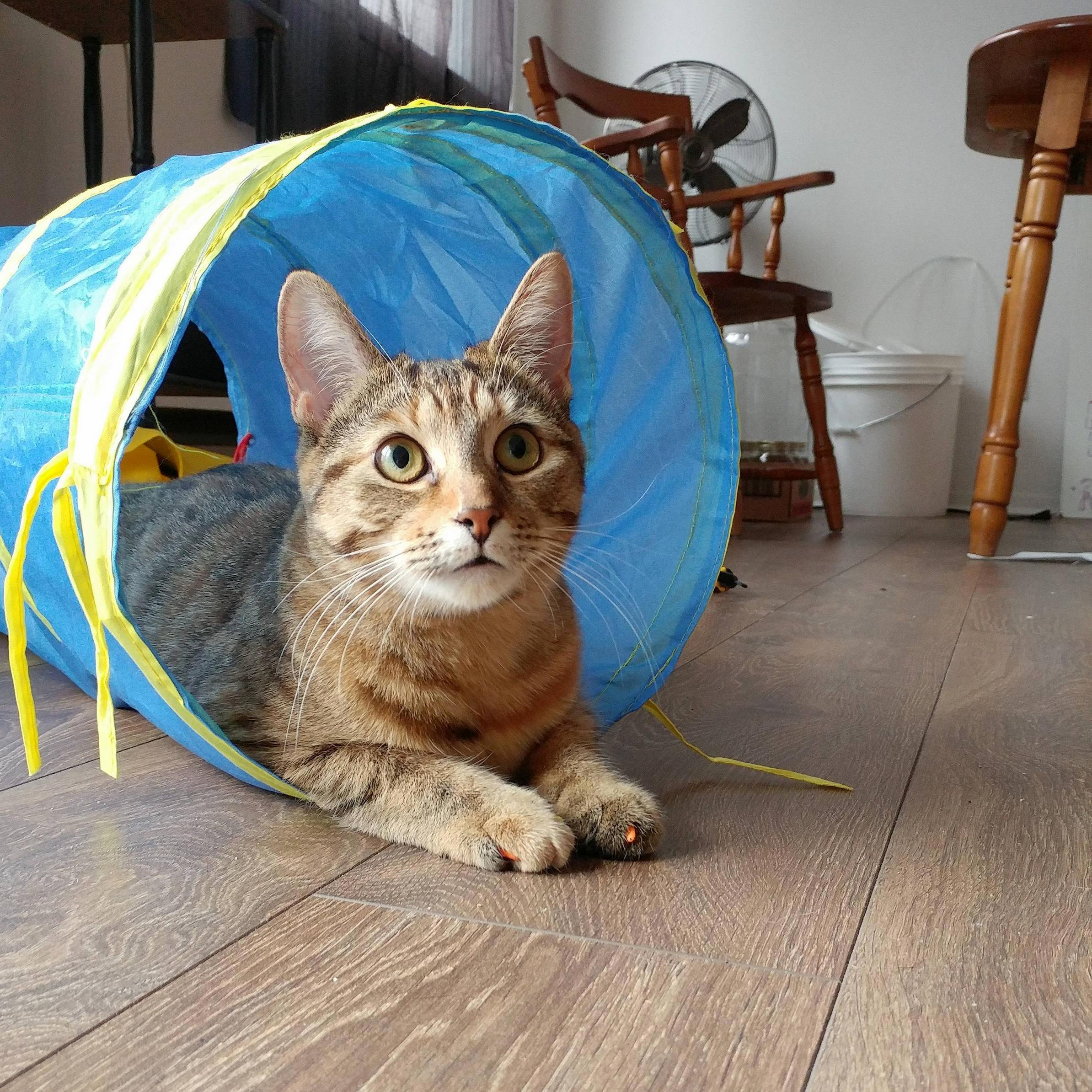 Timbit in a tunnel