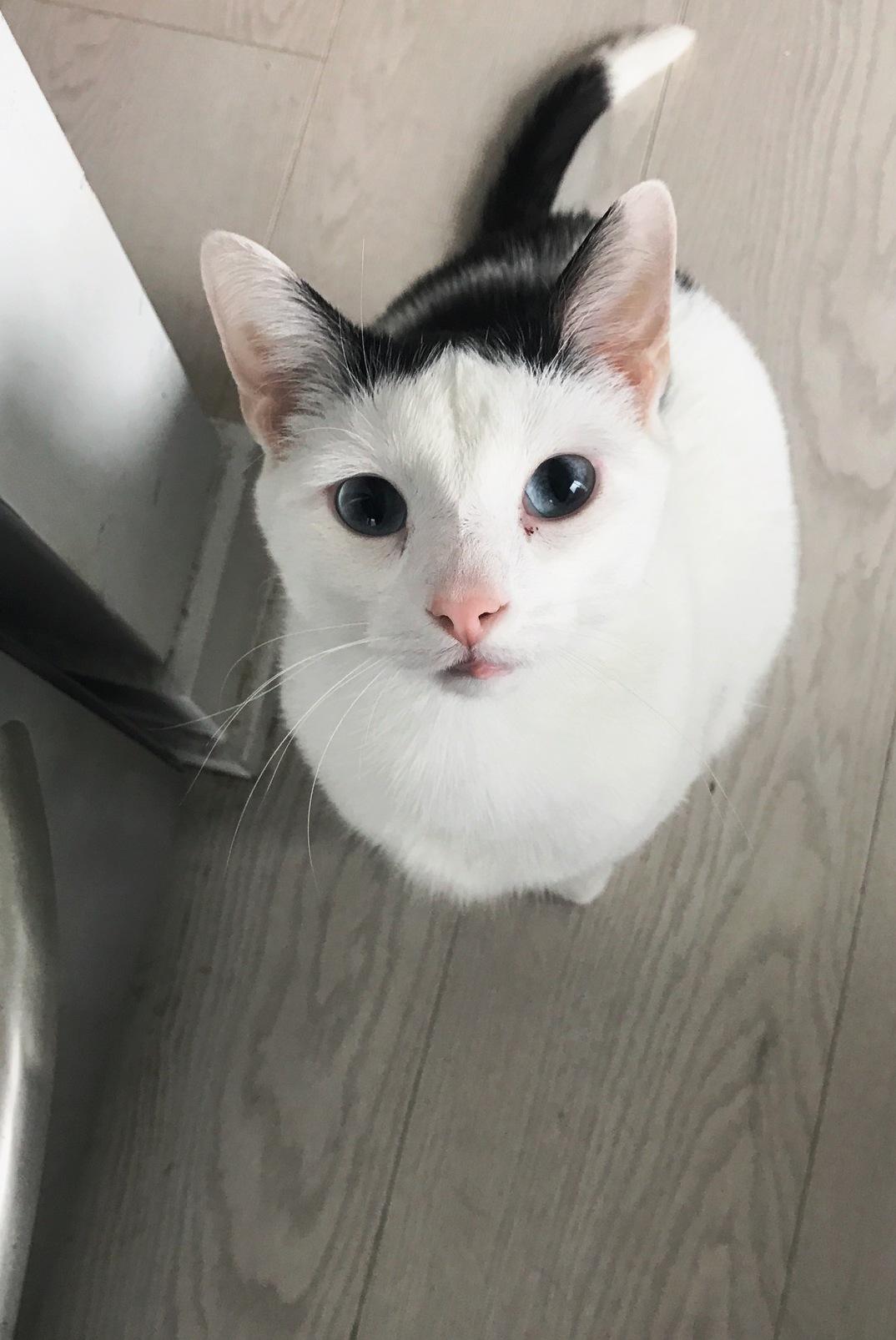Today apollo is a birthday kitten hes 3