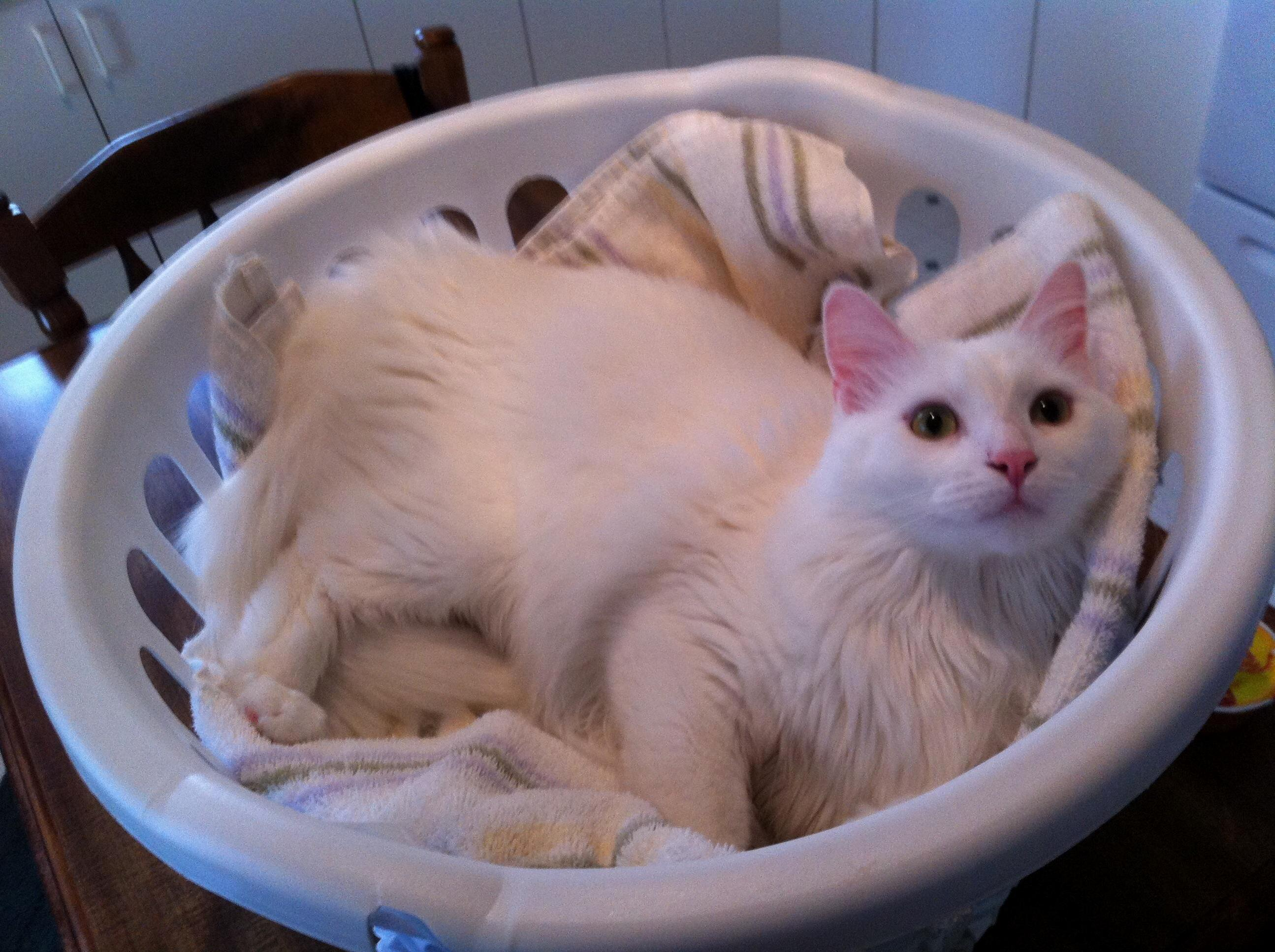 A tisket a tasket this is puff in a basket p