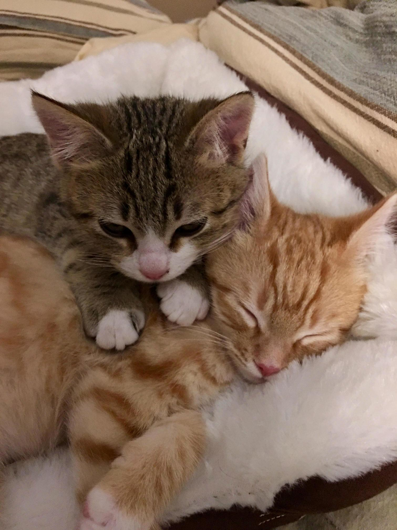 Archie and tigger when they first arrived home