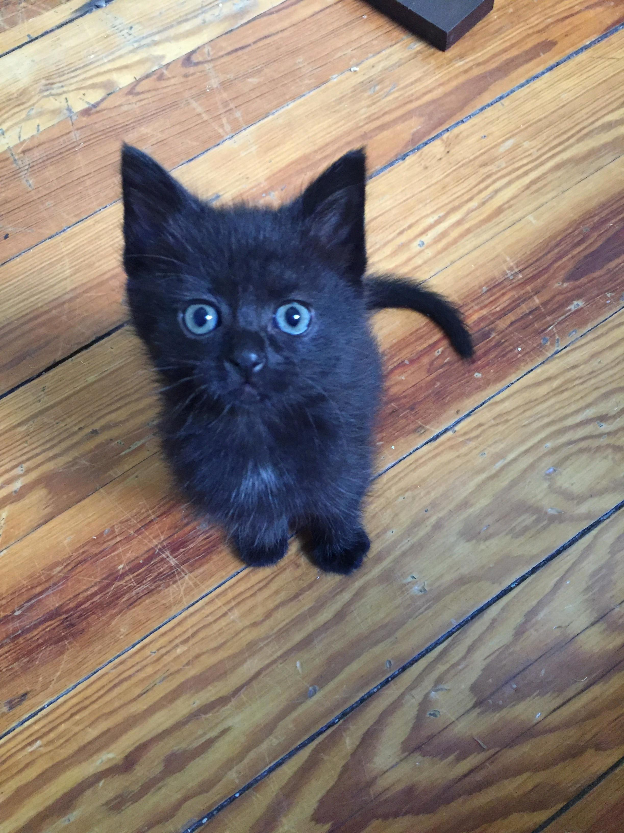 Atomic cake the foster kitten