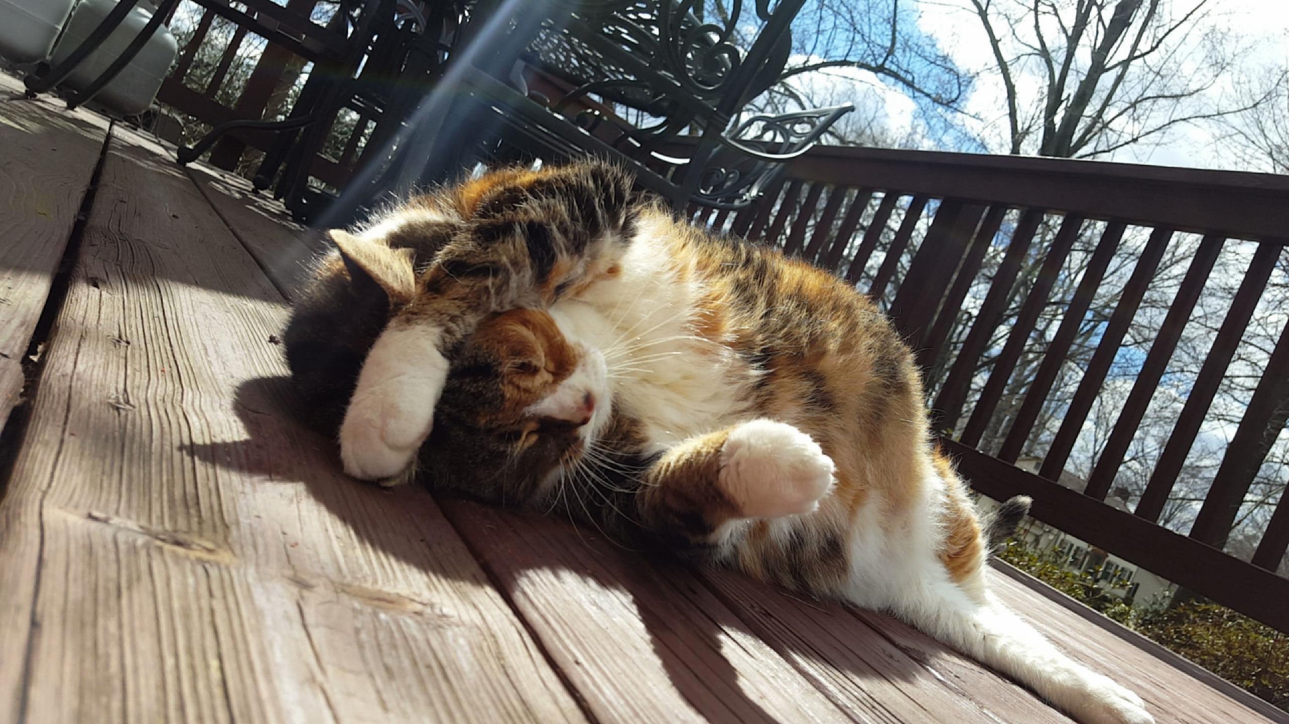 Basking in the sunlight
