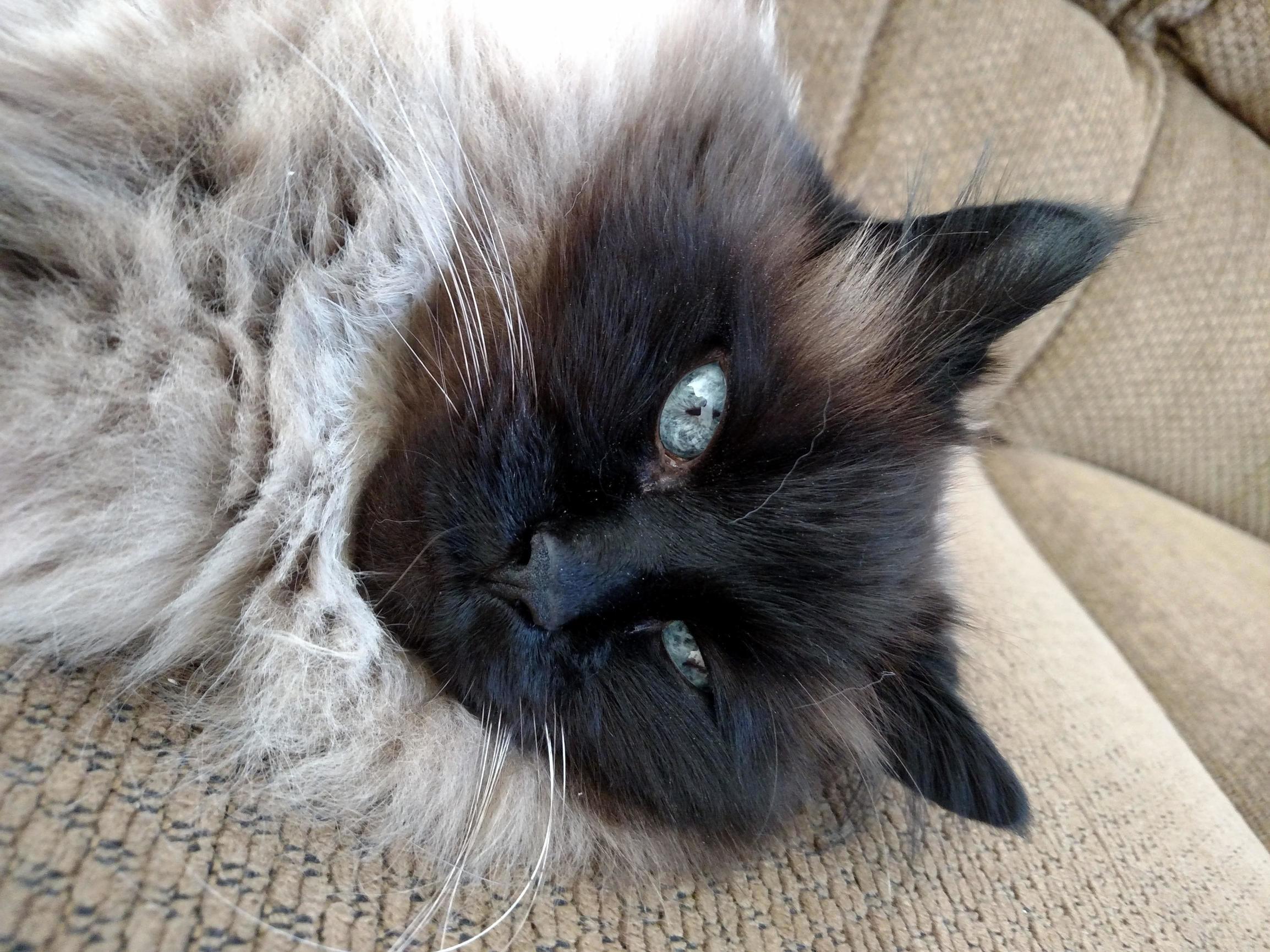 Blu eyes