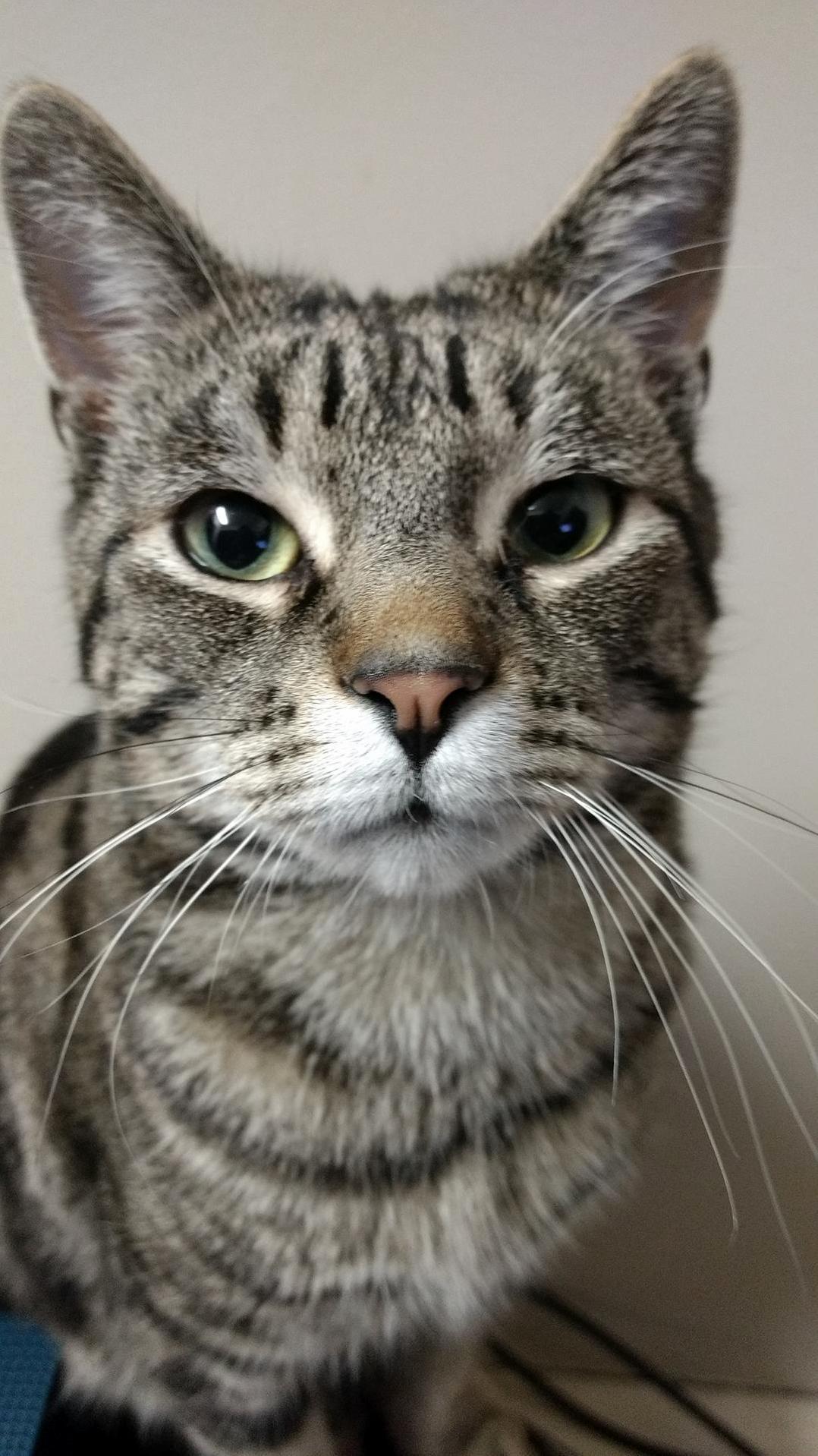 Cassius the curious cat