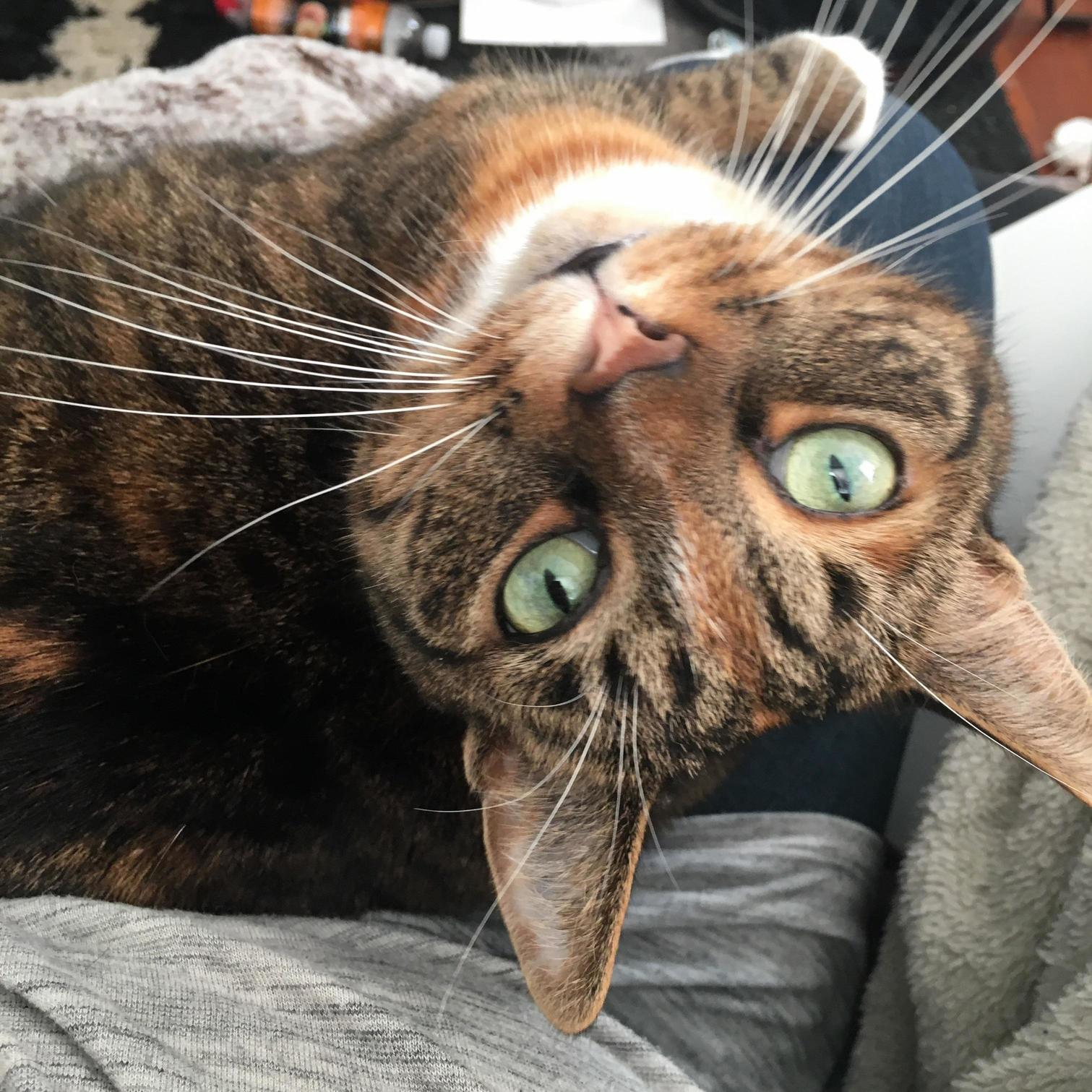 Chloe prefers to look at me upside down.