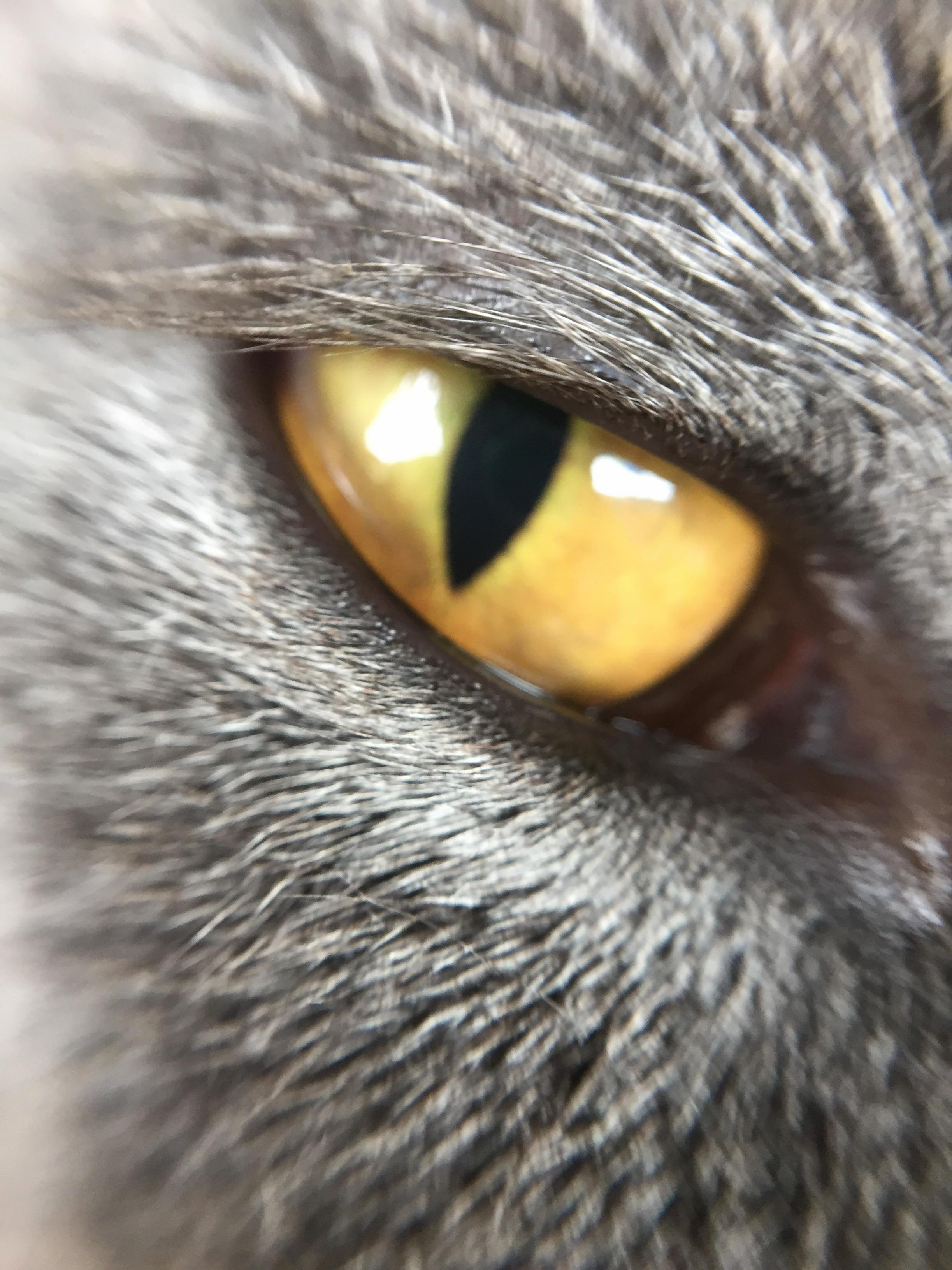 Close up of my rescue kittys eye. shes a beautiful blue grey with these stunning yellow eyes.