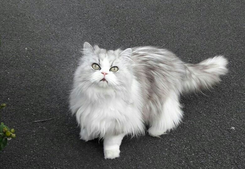 Crazy eyed fluff ball from down the street