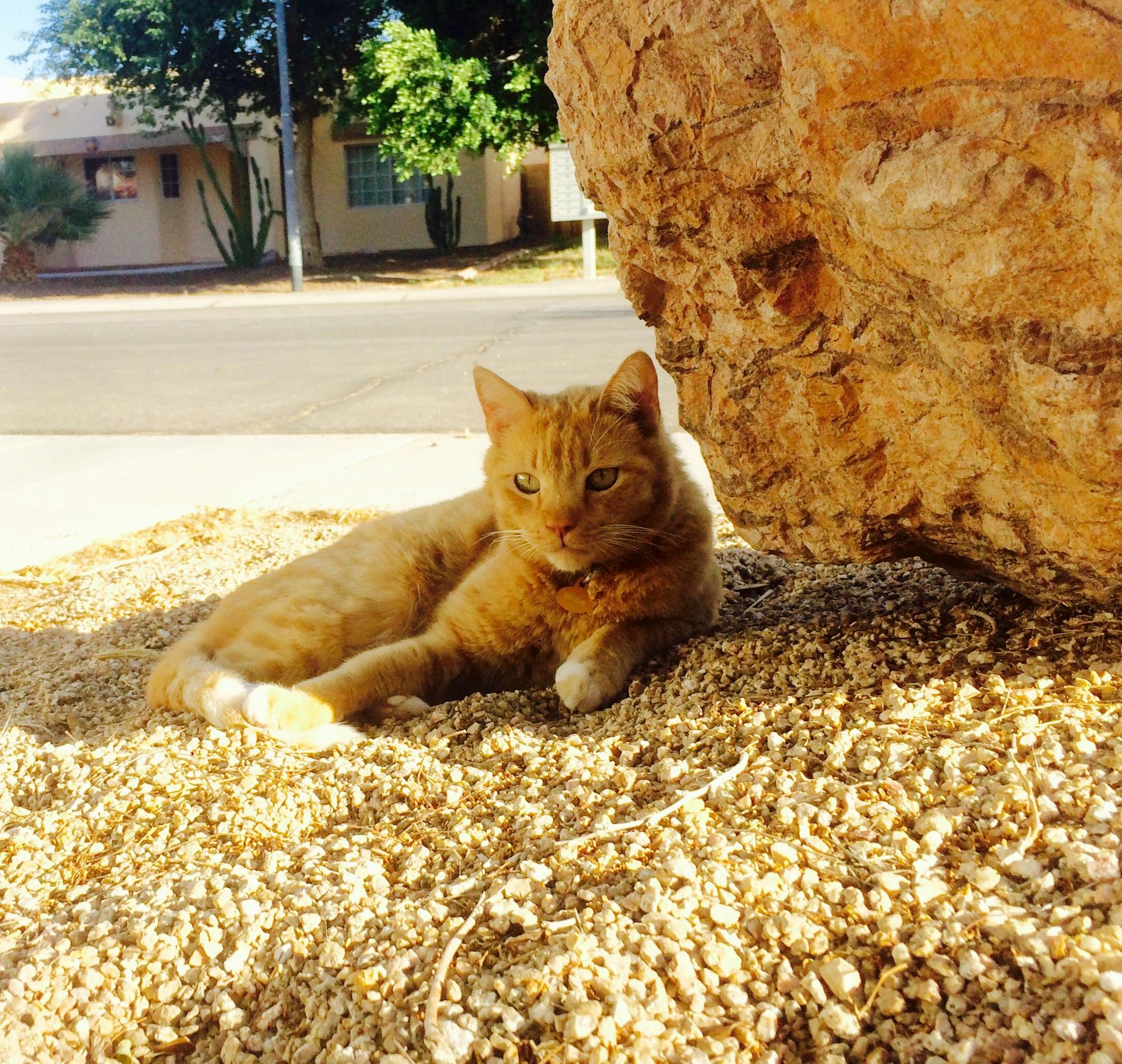 Ginger desert dew