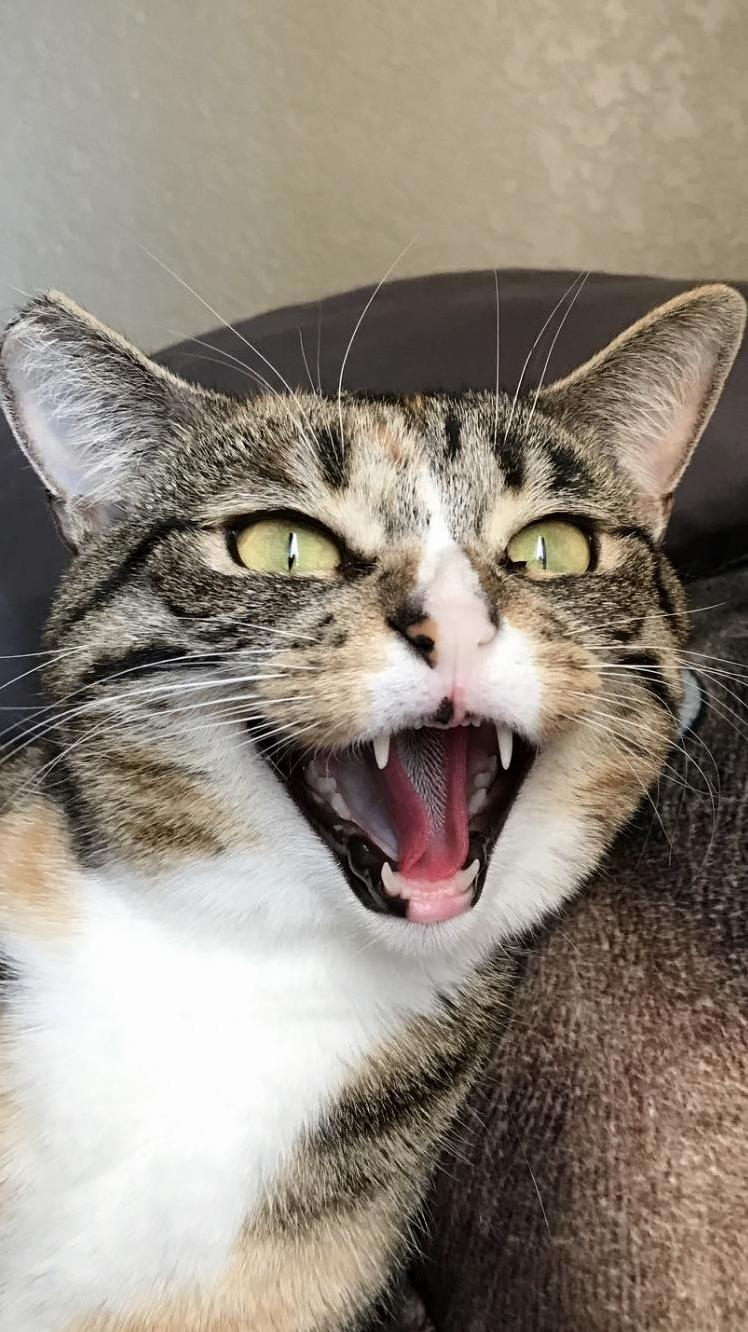 Gorgeous shot of my cat hissing