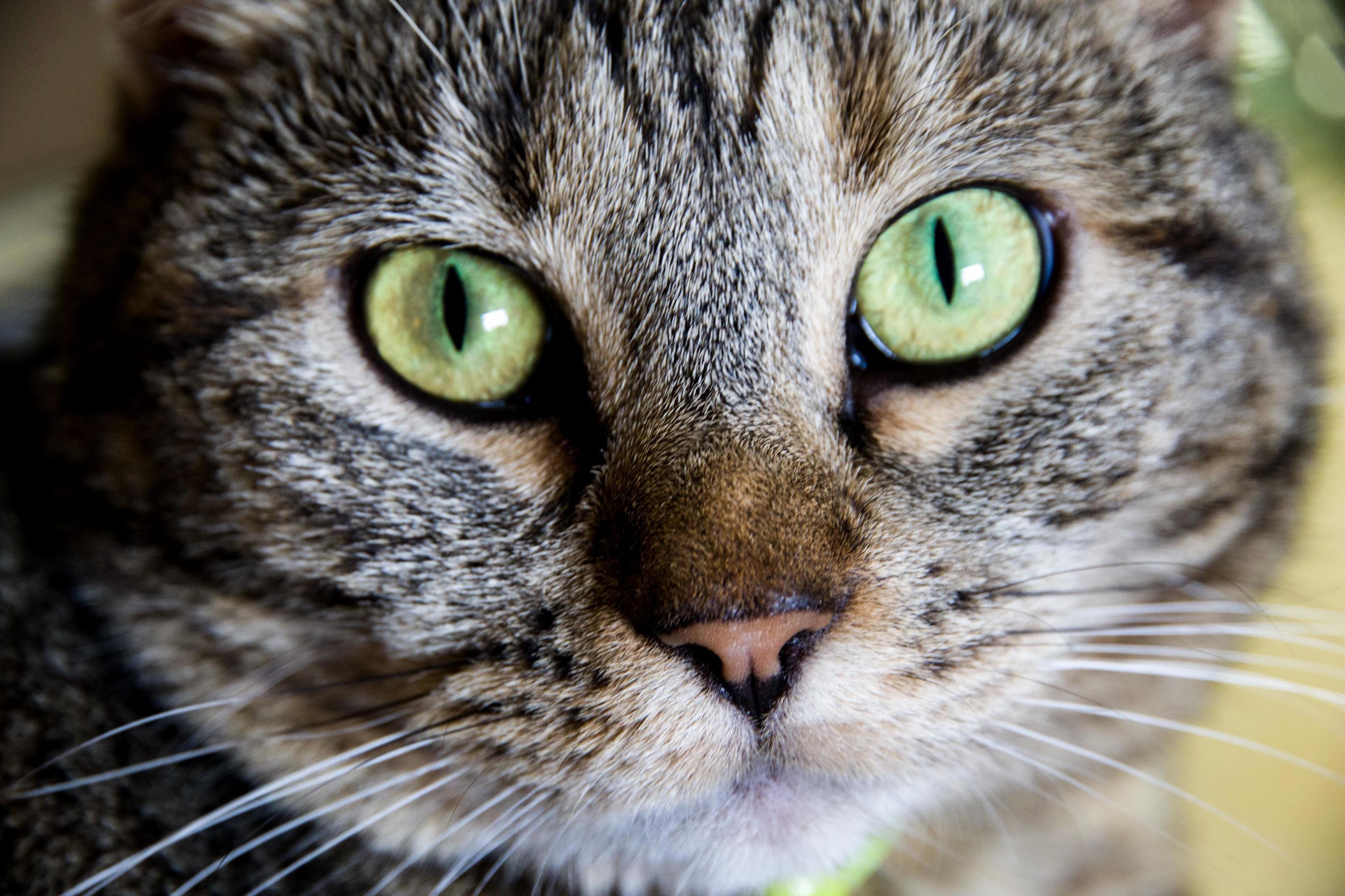 Green eyed beauty.