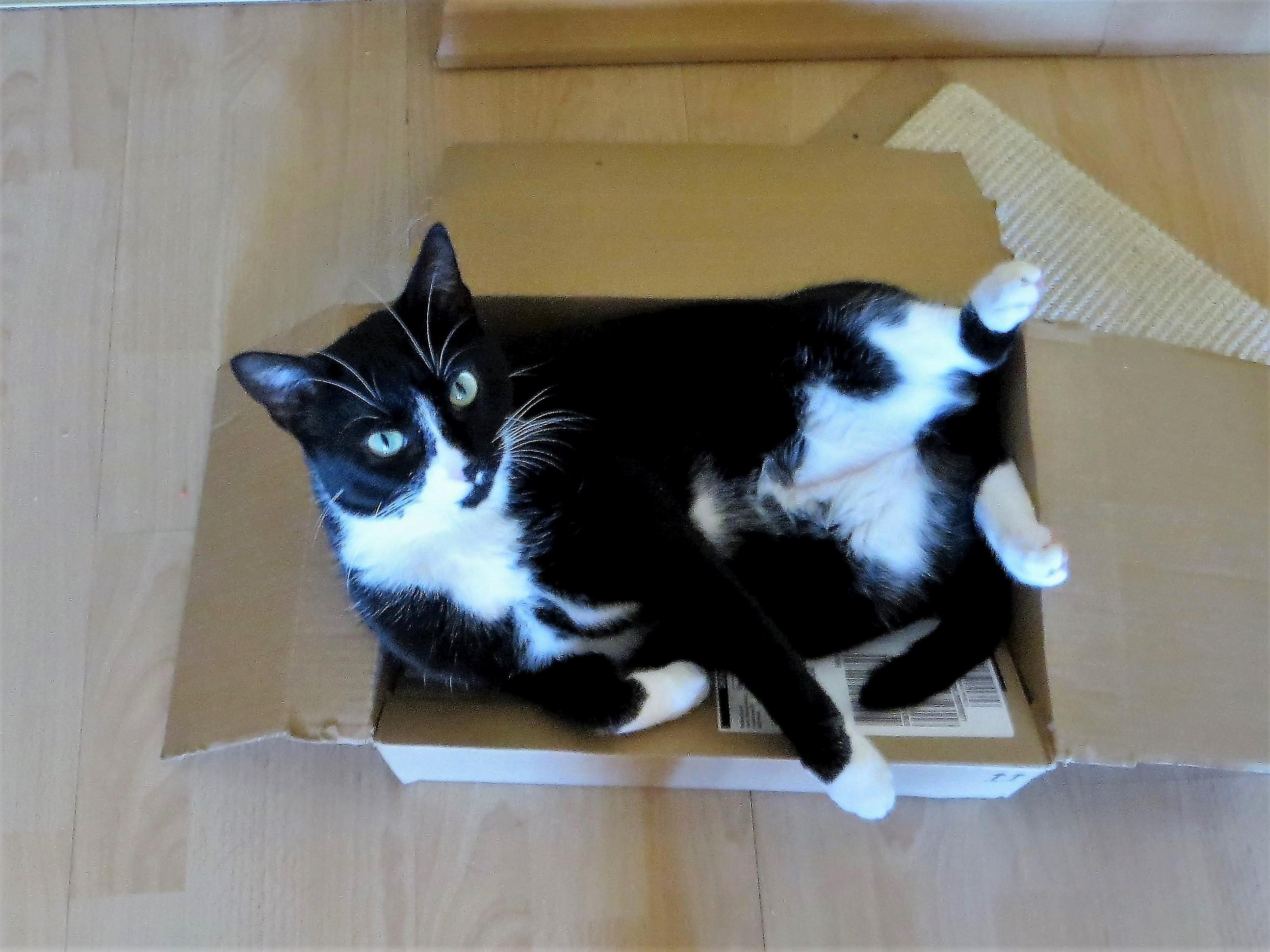 I only order online to make my cat happy