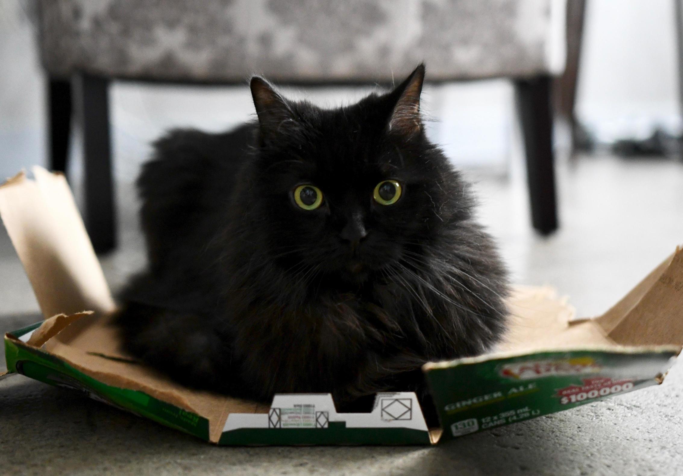 I think she likes cardboard