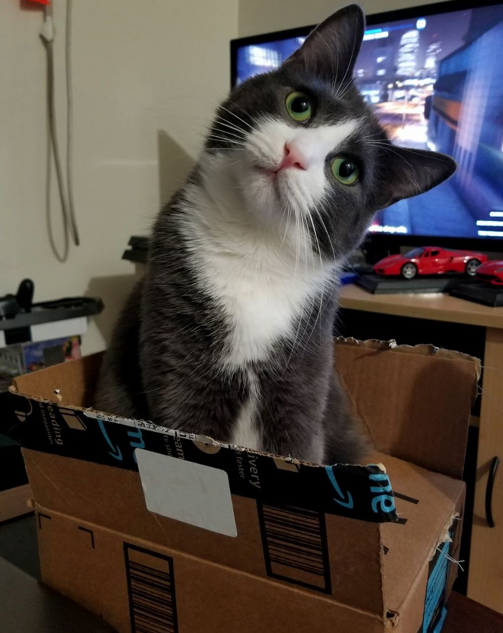 I ve never seen enzo in a box before. my excitement when i saw him like this seemed to be concerning him.