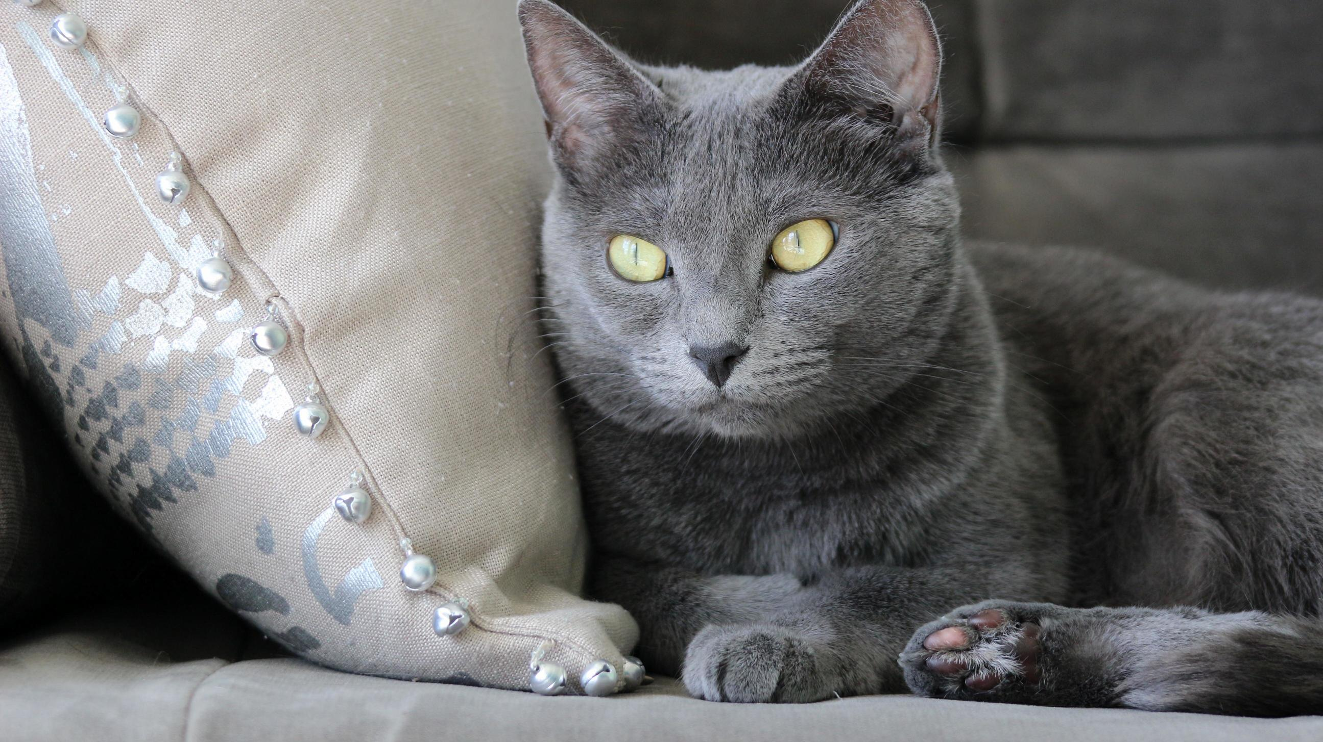 If she only knew we accessories the home around her. all hail feline queen.