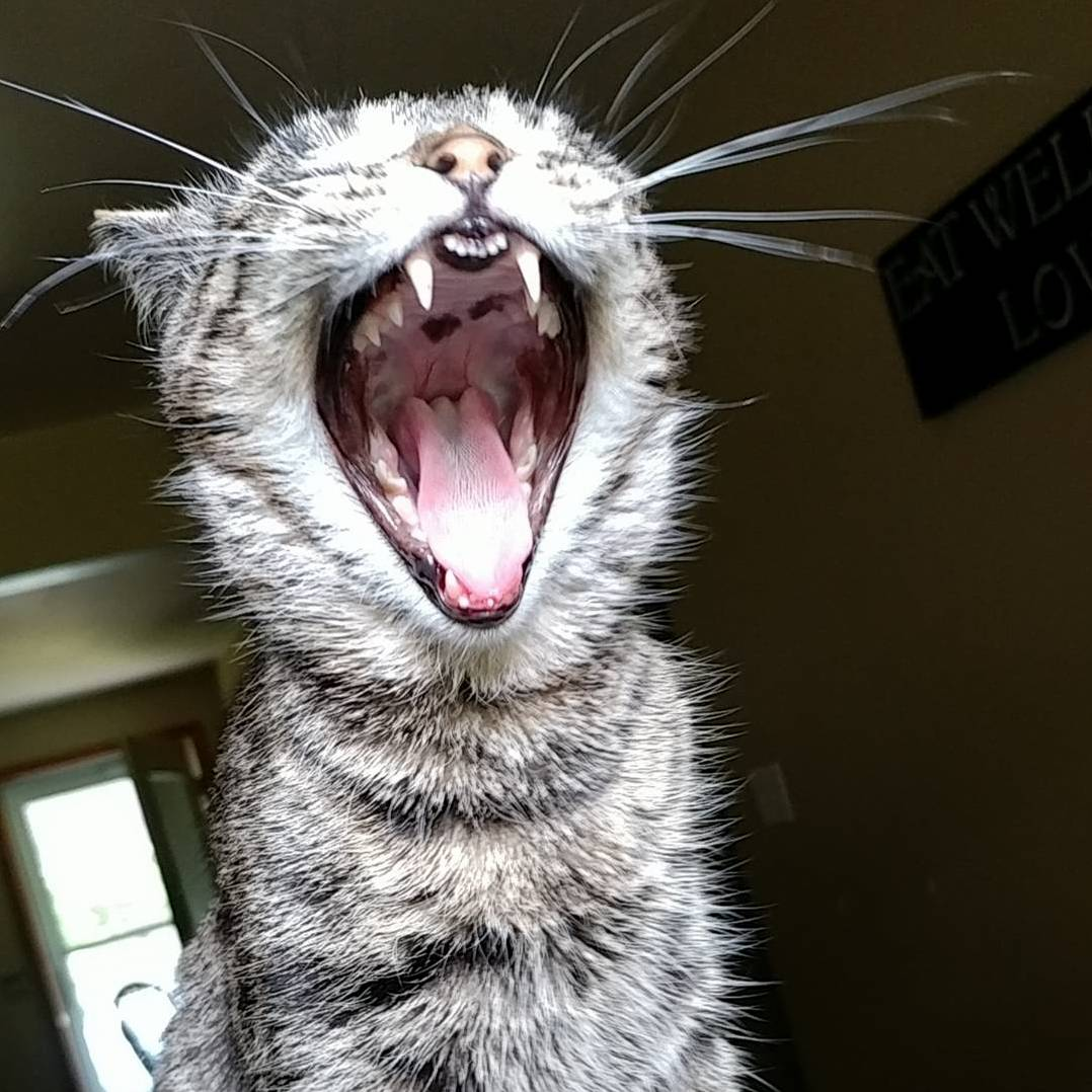Kikyo says meow