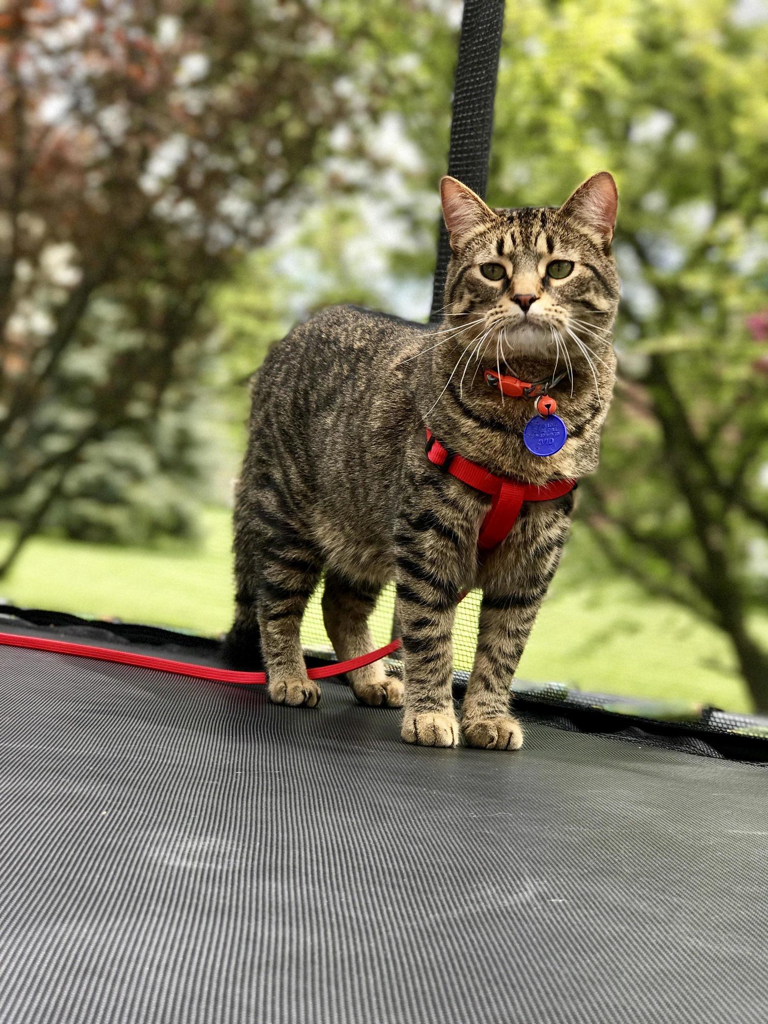 Kitty on a leash